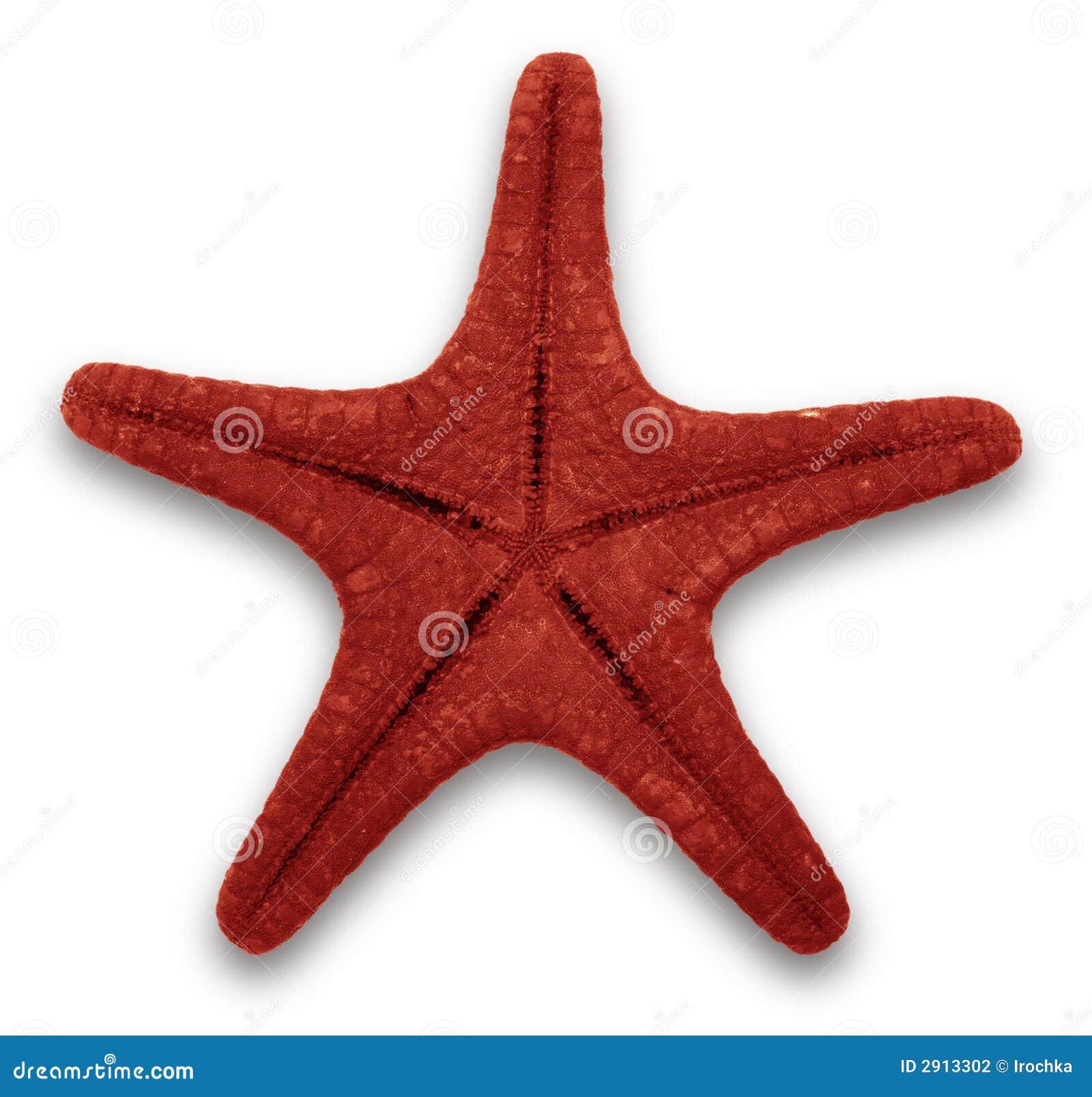 Czerwona rozgwiazdy