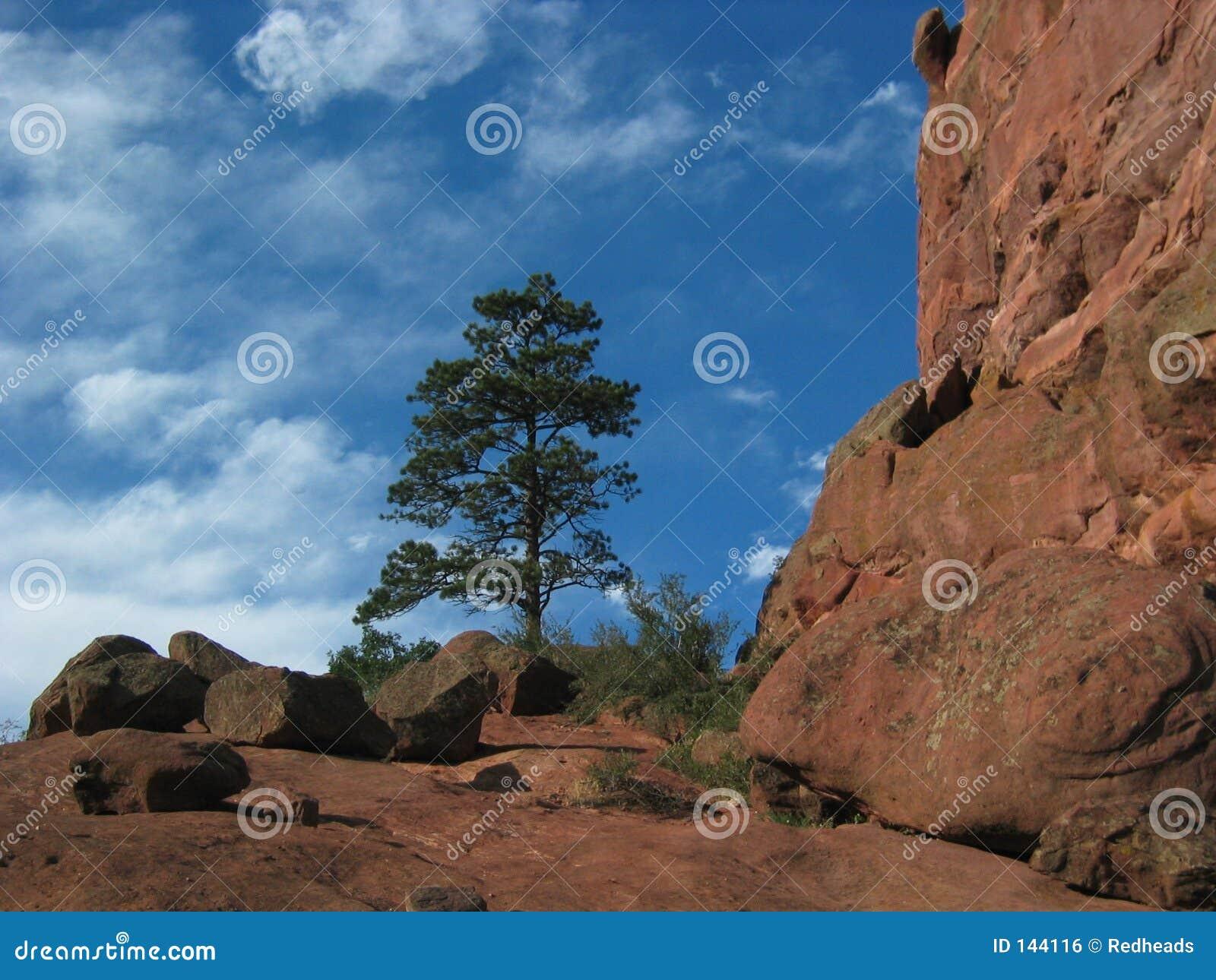 Czerwone ampitheater sosnowa rock