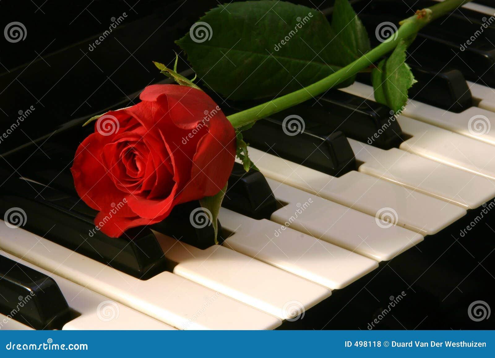 Czerwone miłości muzycznej róża