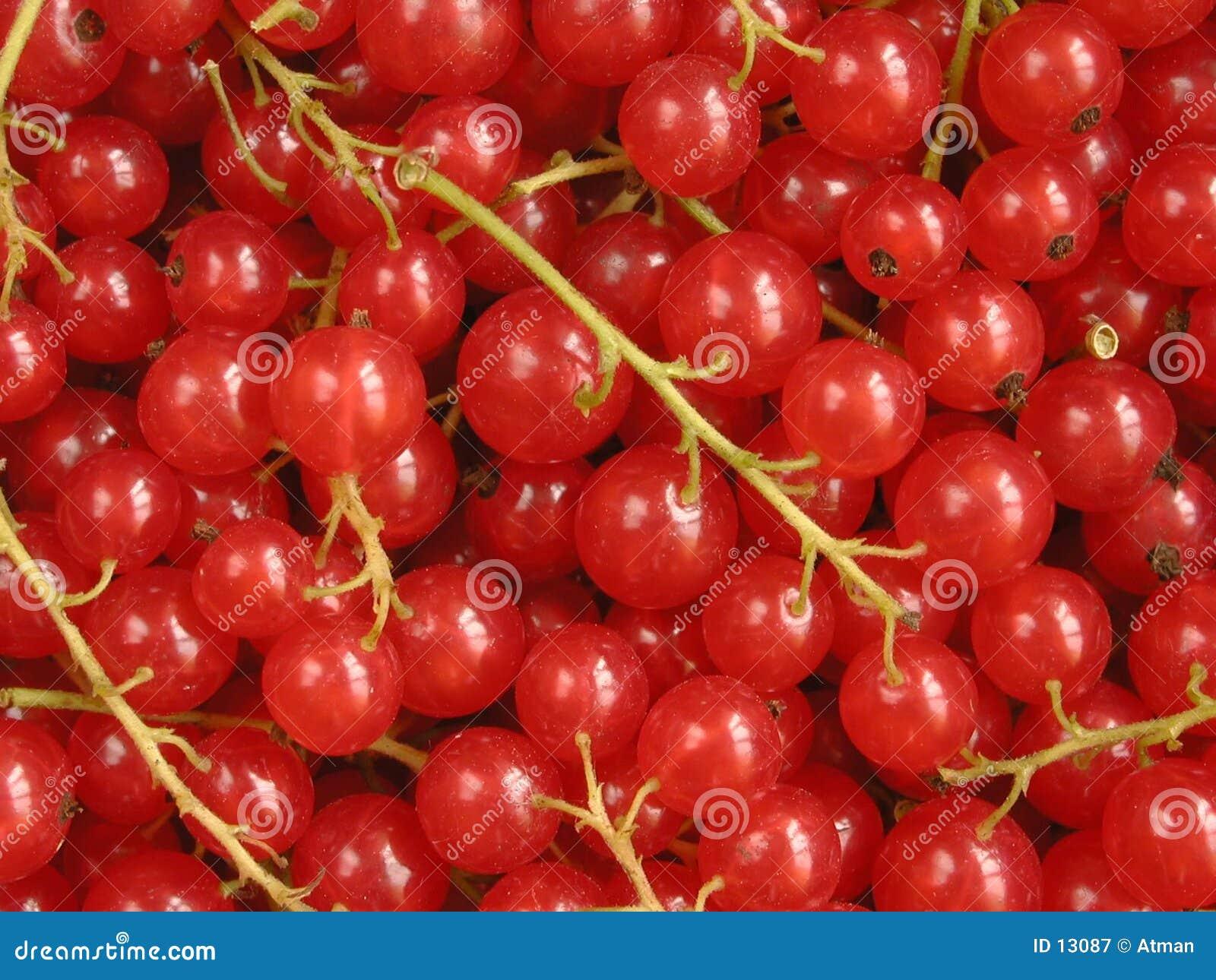 Czerwone porzeczki