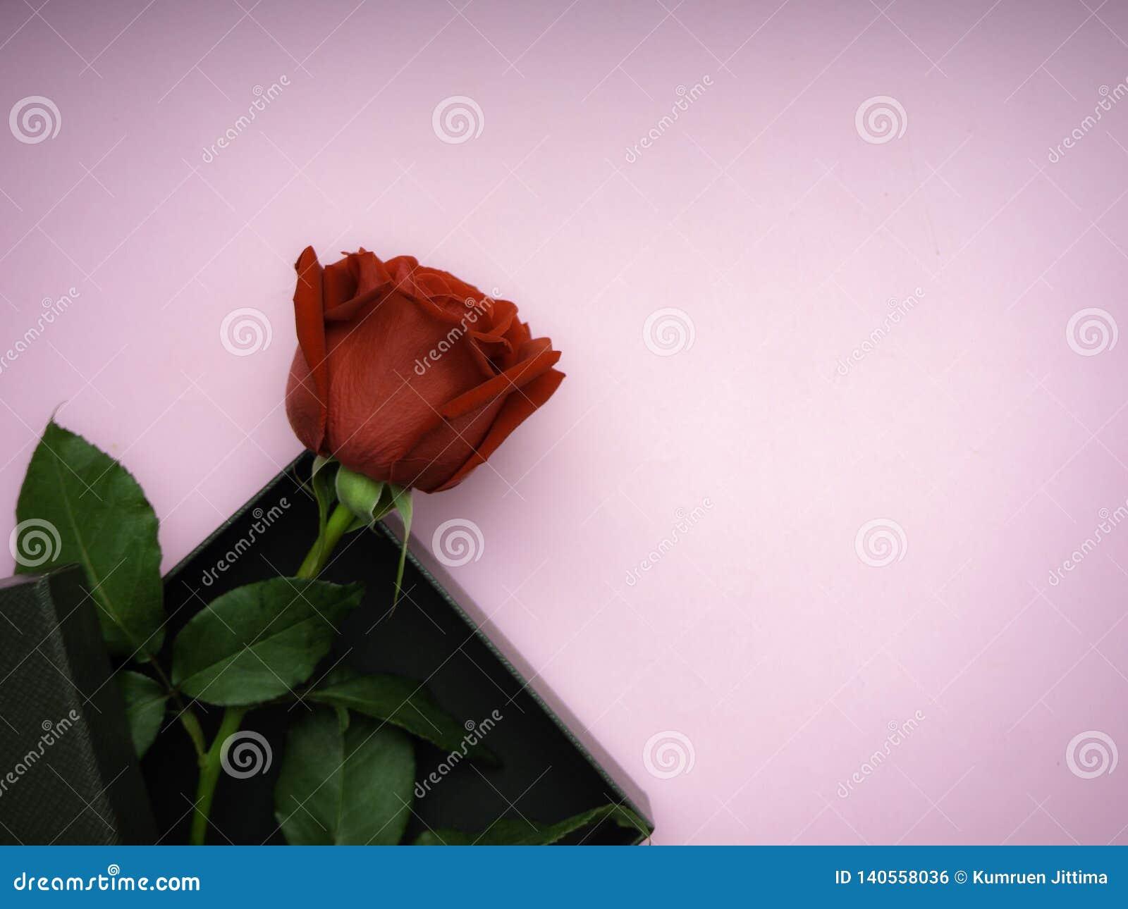 Czerwone róże z prezenta pudełkiem na menchiach tapetują