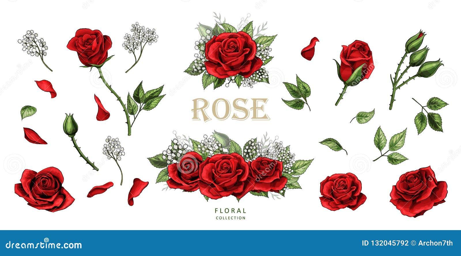 Czerwone róże wręczają patroszeni ilustracyjni elementy barwiącego set