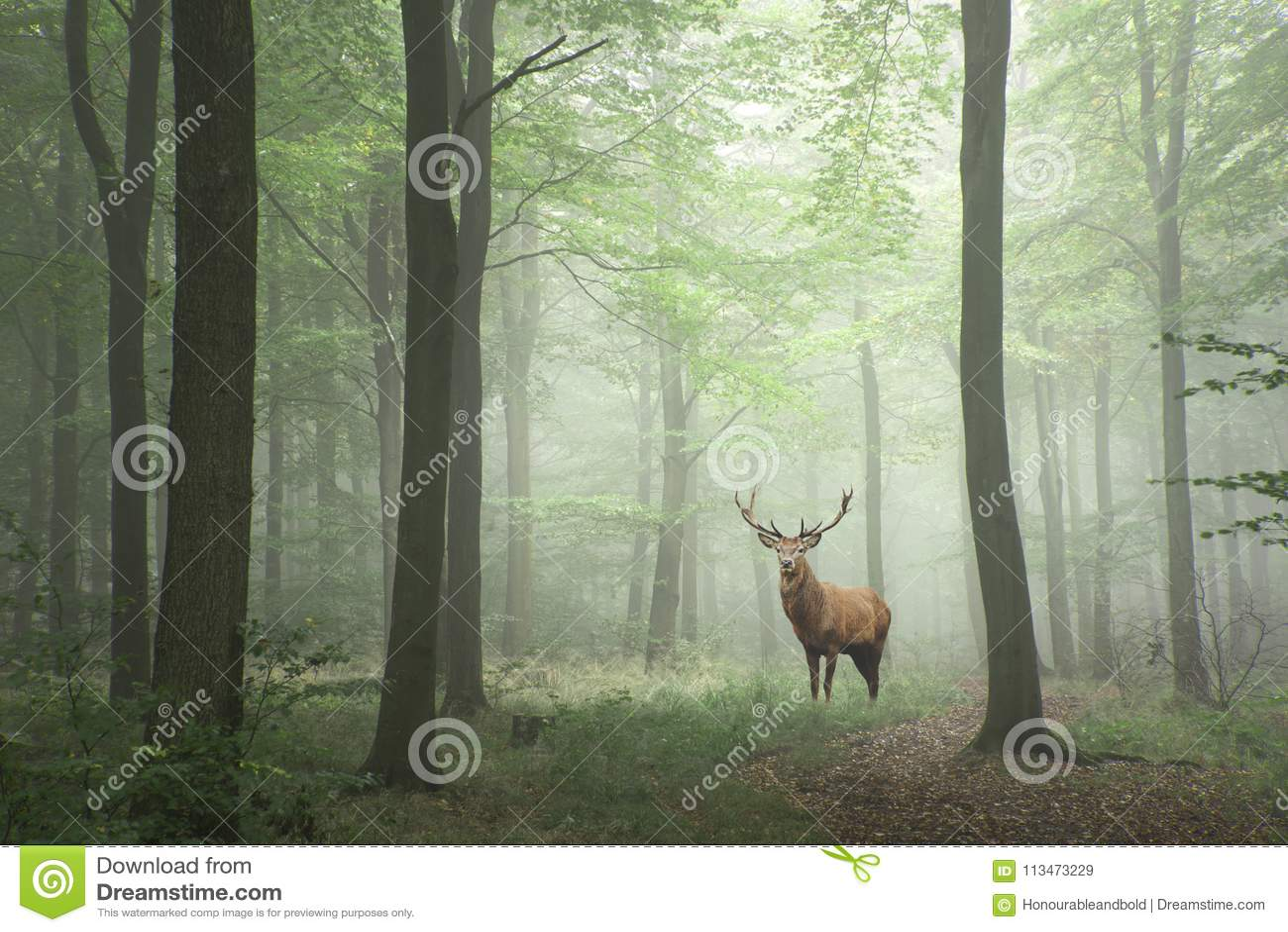 Czerwonego rogacza jeleń w bujny zieleni bajki wzrostowego pojęcia mgłowych pierwszych planach