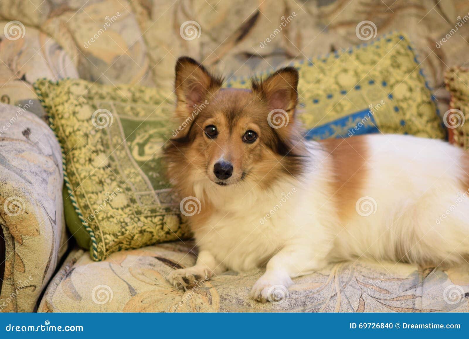 Czerwonej twarzy piękny pies