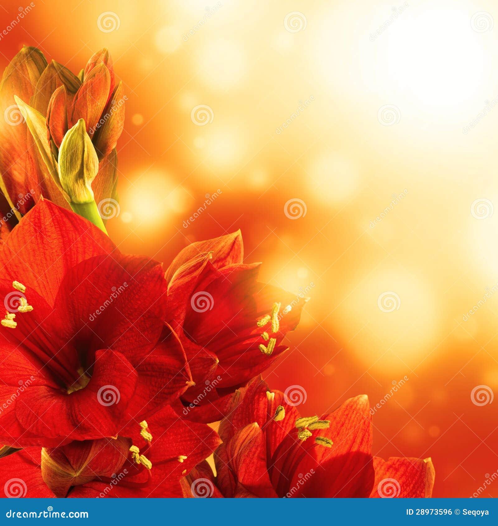 Czerwoni kwiaty, bukiet