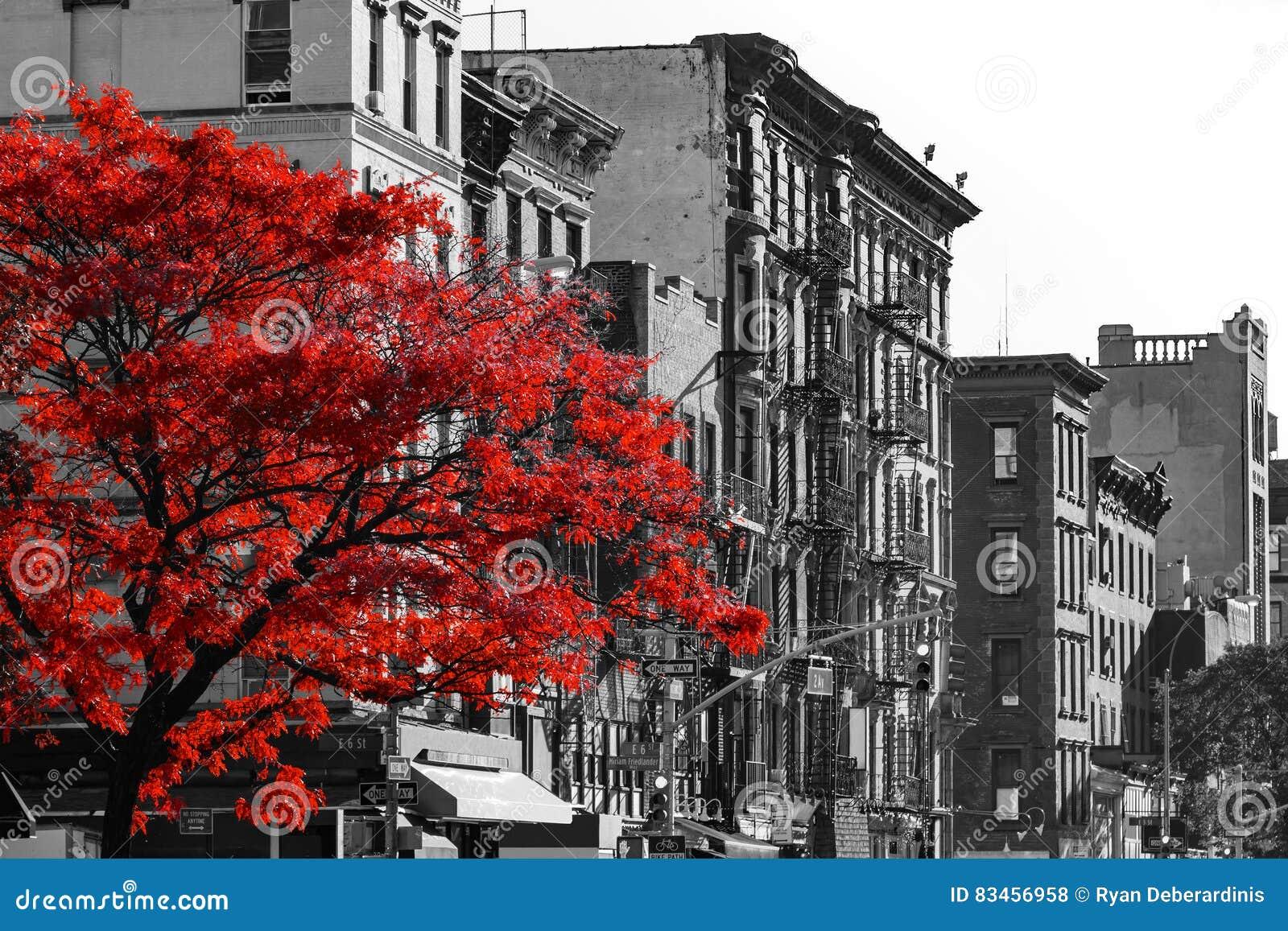 Czerwony drzewo na Czarny I Biały Miasto Nowy Jork ulicie