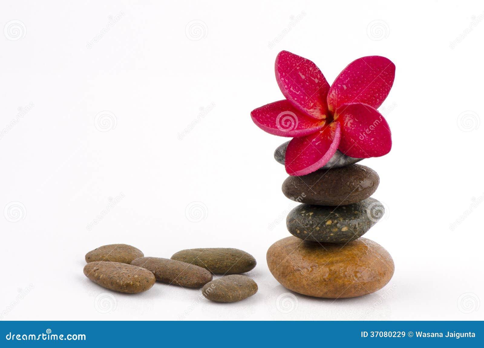Download Czerwony Frangipani, Czerwony Frangipani Na Tło Kamieniu. Obraz Stock - Obraz złożonej z obrazki, naturalny: 37080229