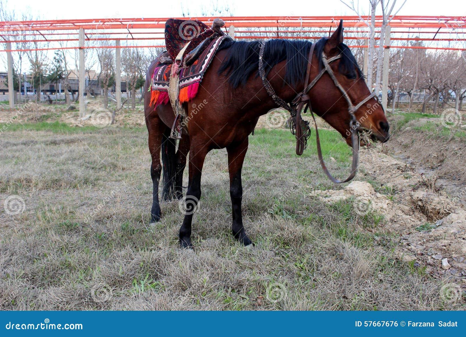 Czerwony koń