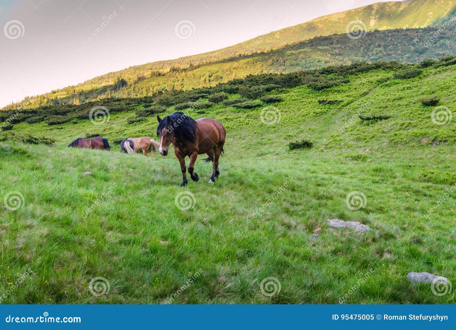 Czerwony koń w górach na zielonej trawie