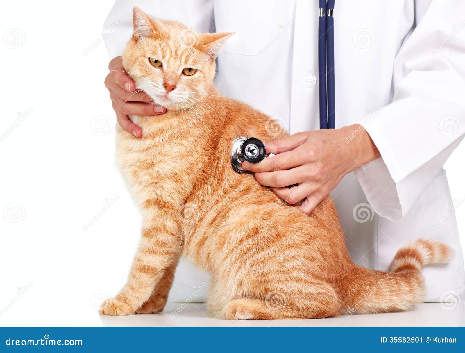 Czerwony kot z weterynarz lekarką.