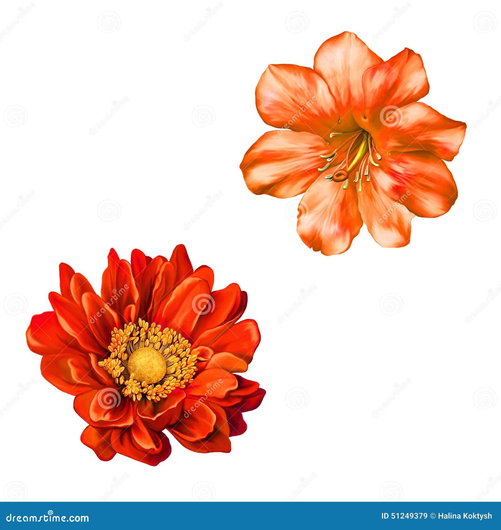 Czerwony Mona Lisa kwiat, wiosna kwiat