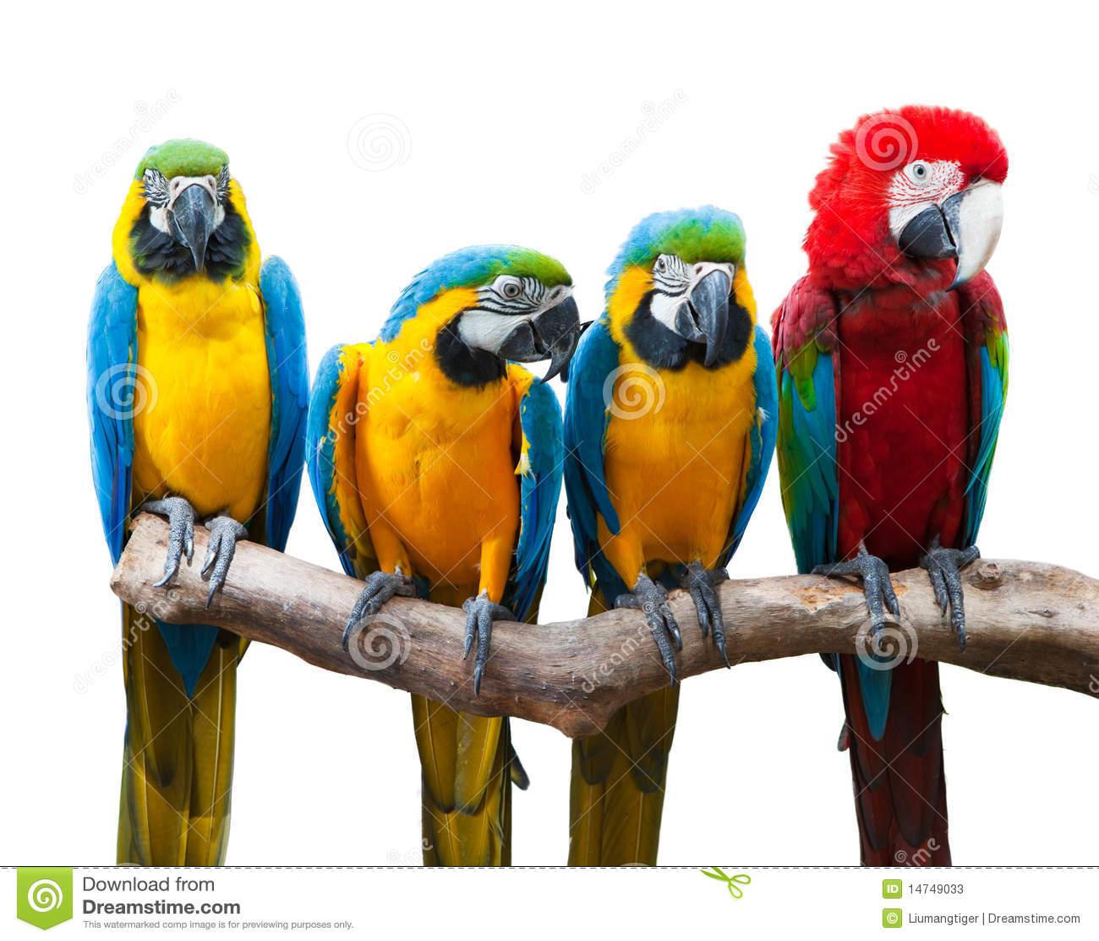 Cztery papugi