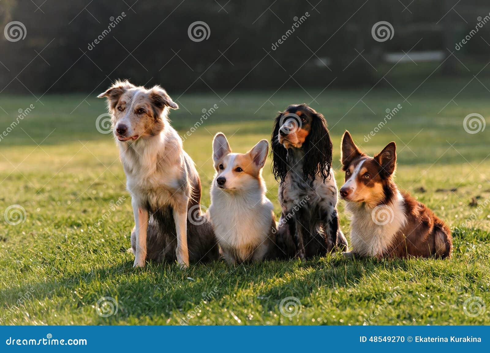 Cztery psa siedzi w parku