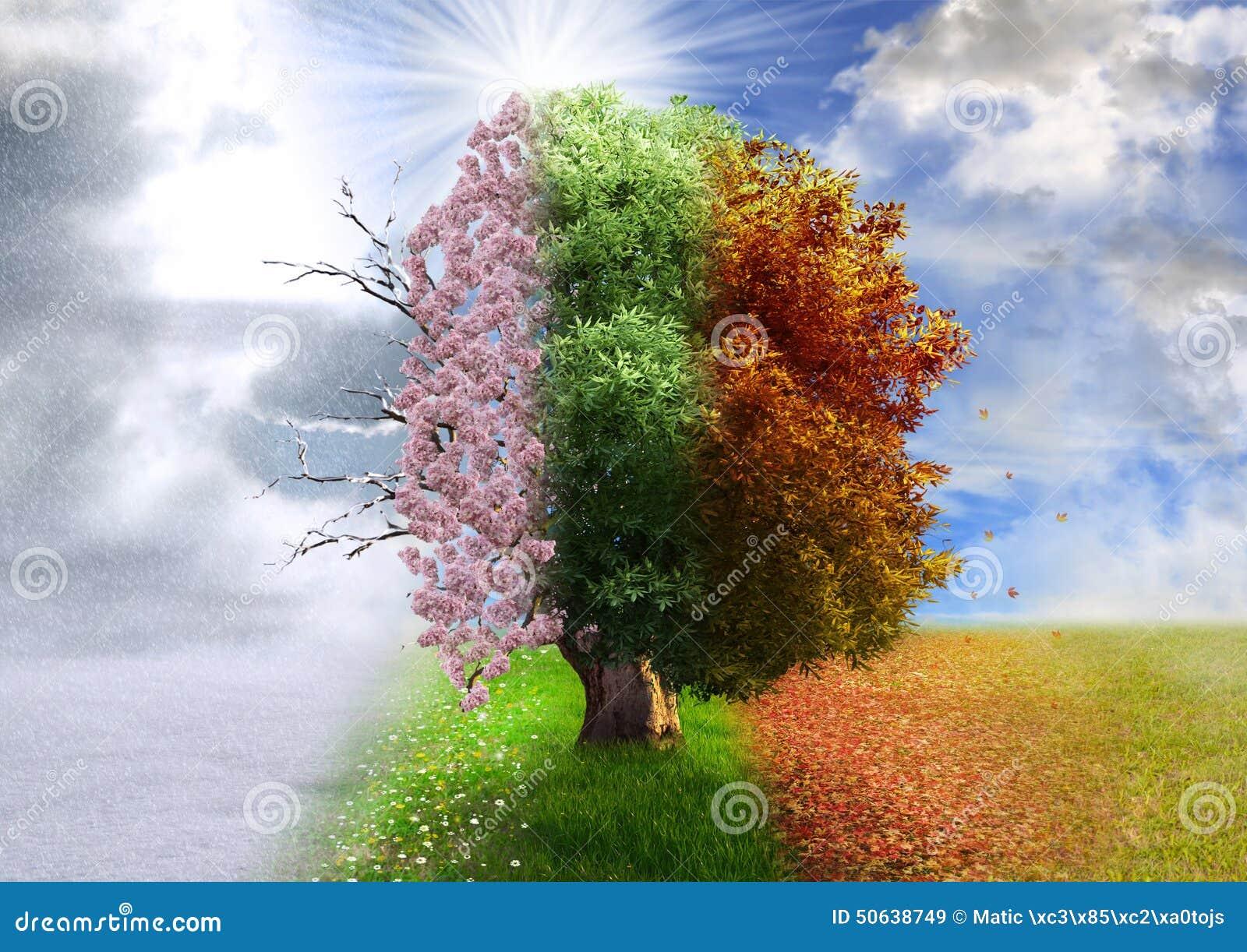 Cztery sezonów drzewo, fotografii manipulacja