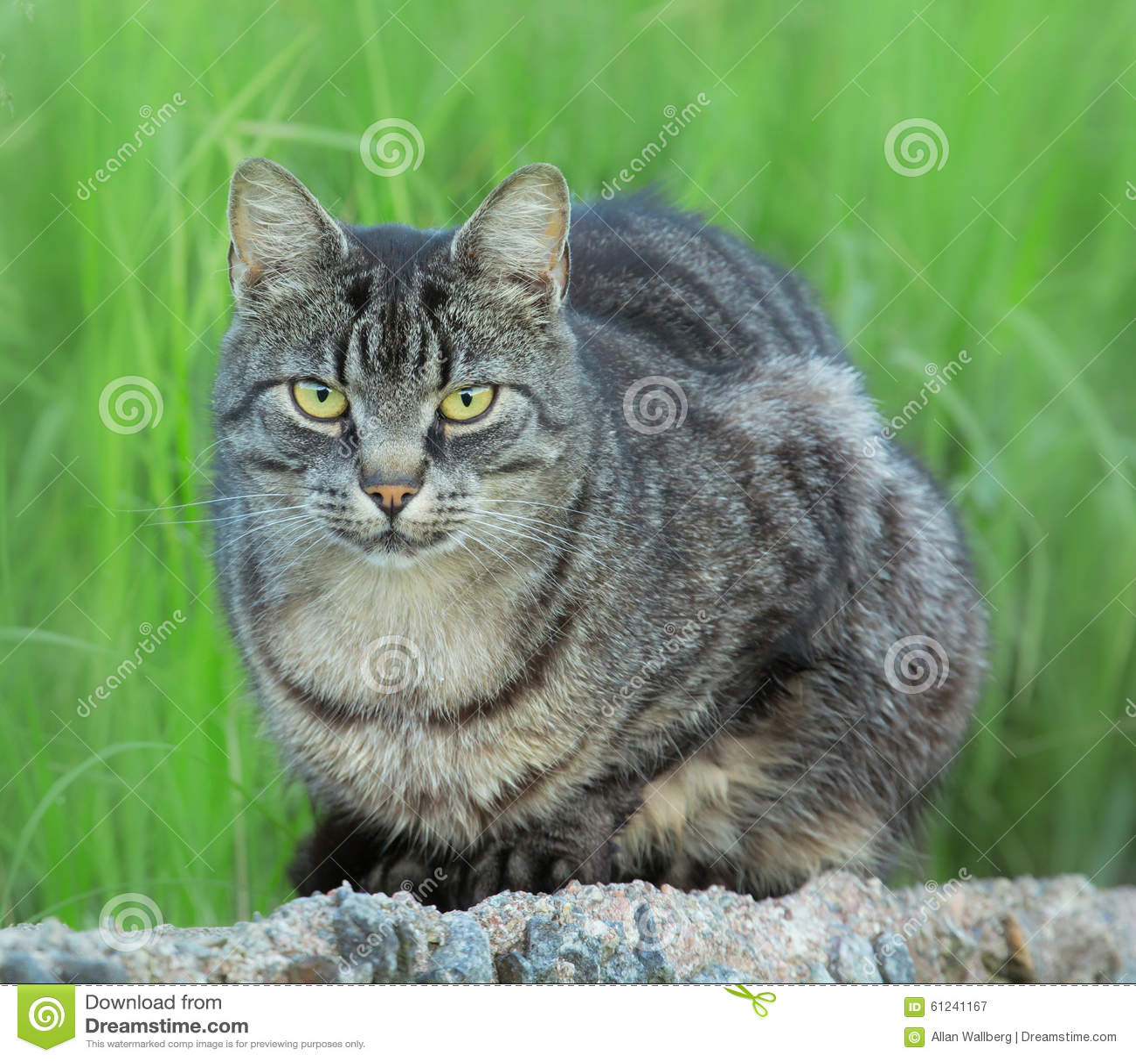 Czujny kot