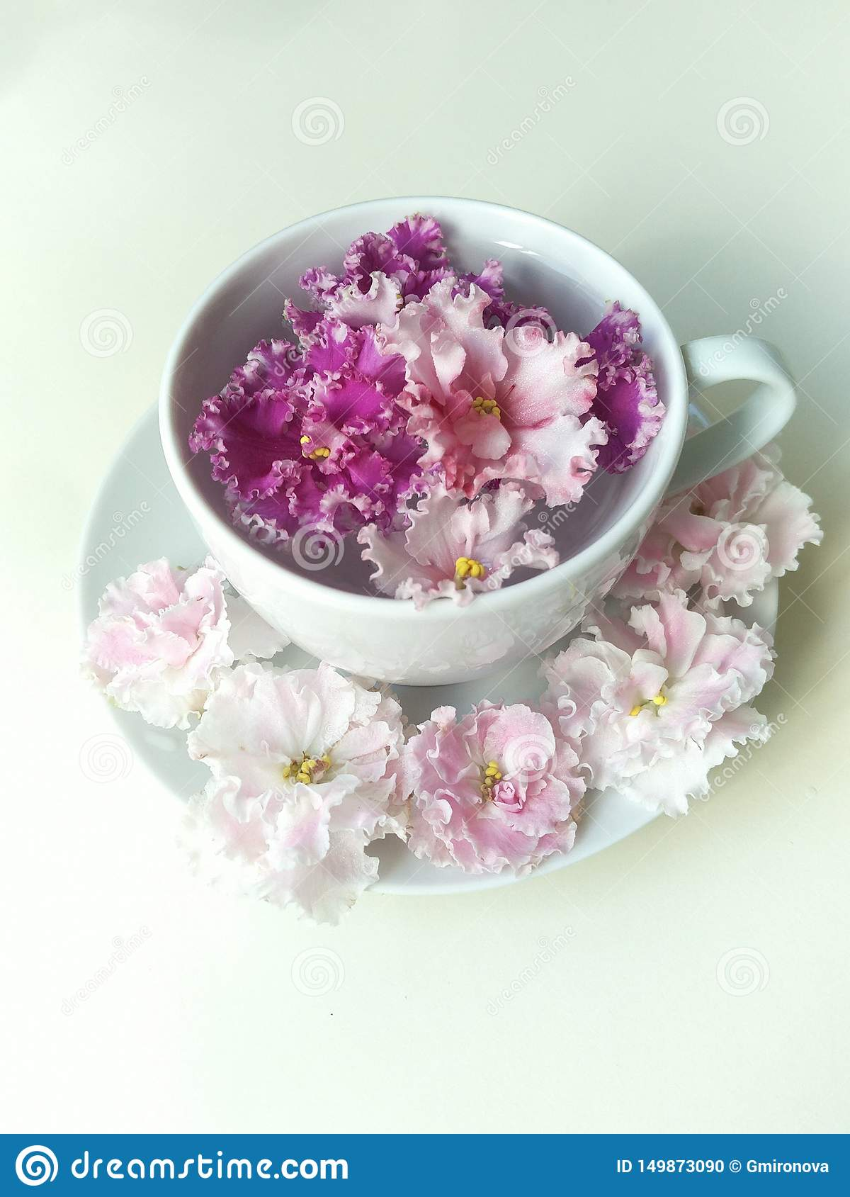 Czysta woda w filiżance spodeczku i, ciemnopąsowy kwiat unosi się w filiżance, sześć delikatnych kwiatów kłama wokoło spodeczka s