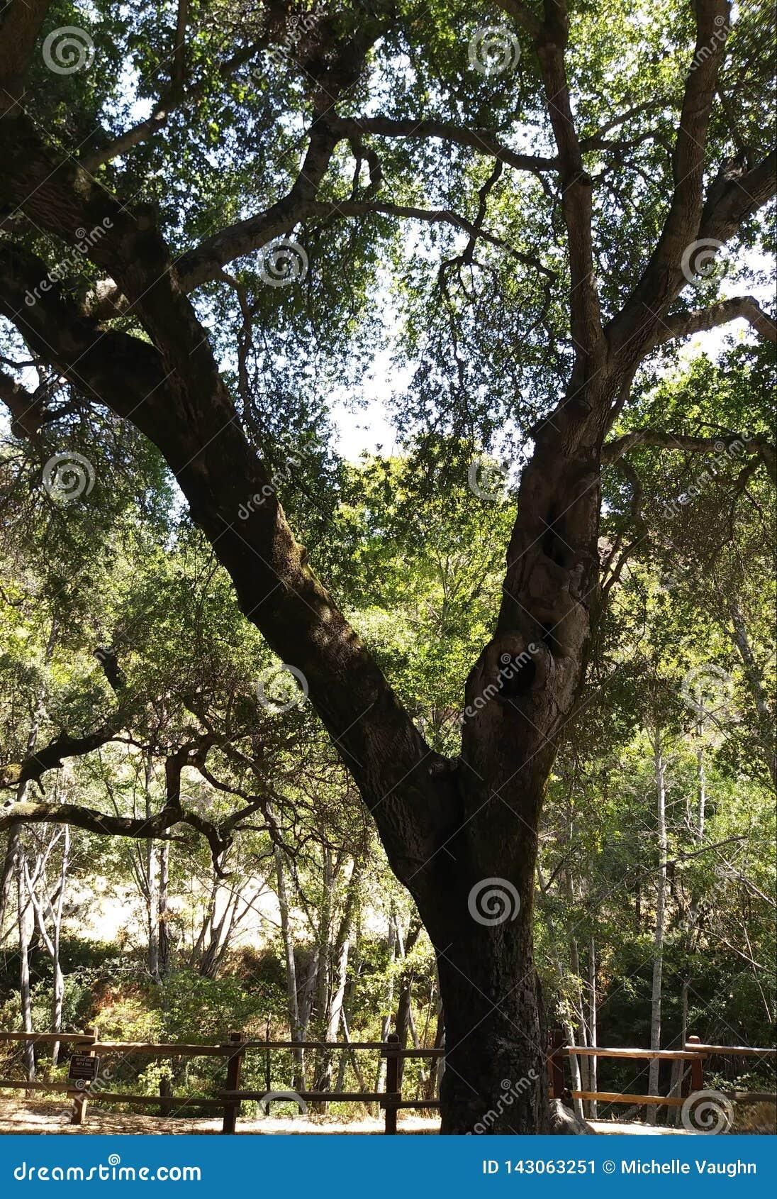 Därför trädet