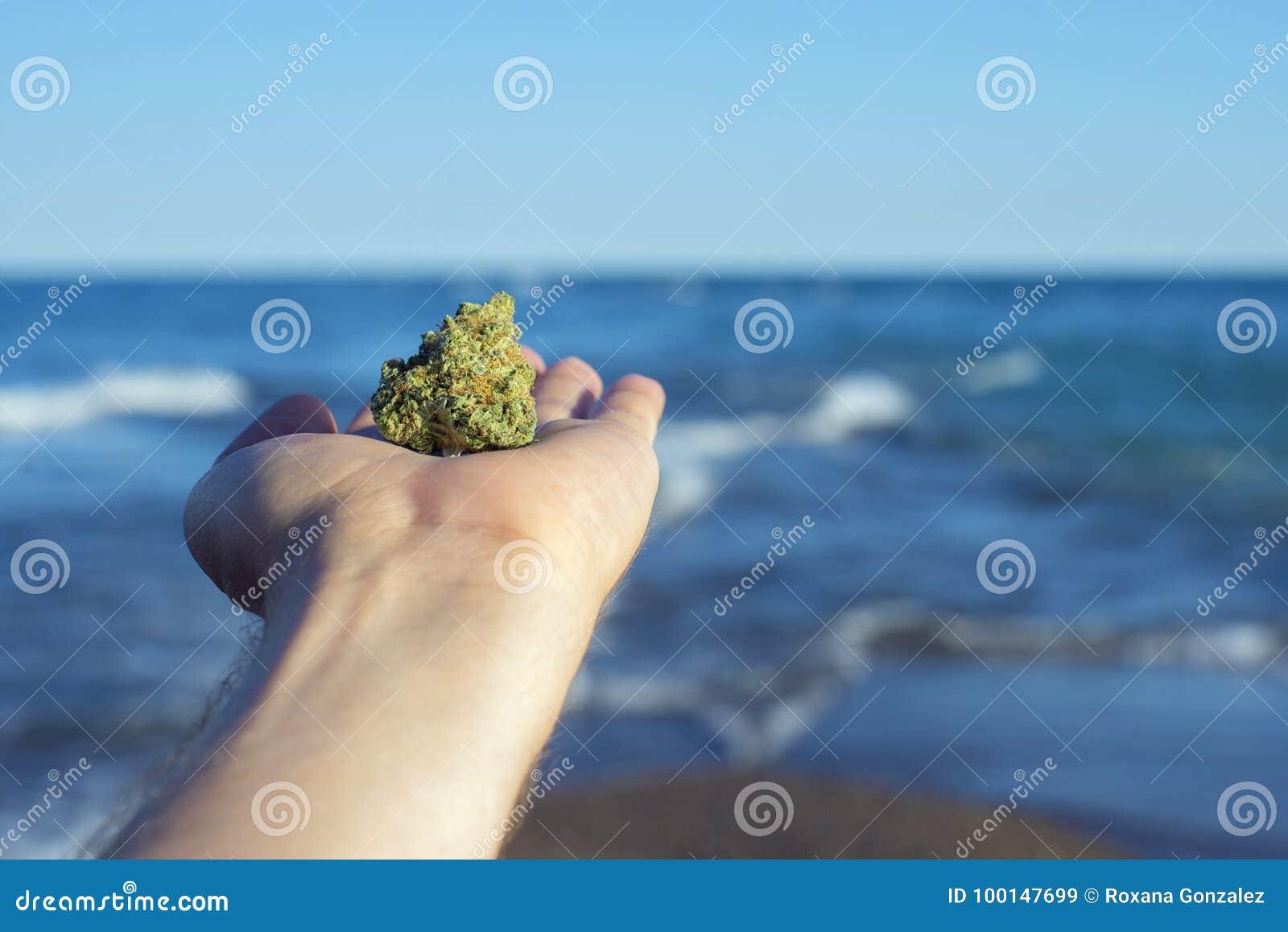 Dé llevar a cabo un nug del cáñamo contra olas oceánicas y el lan del cielo azul
