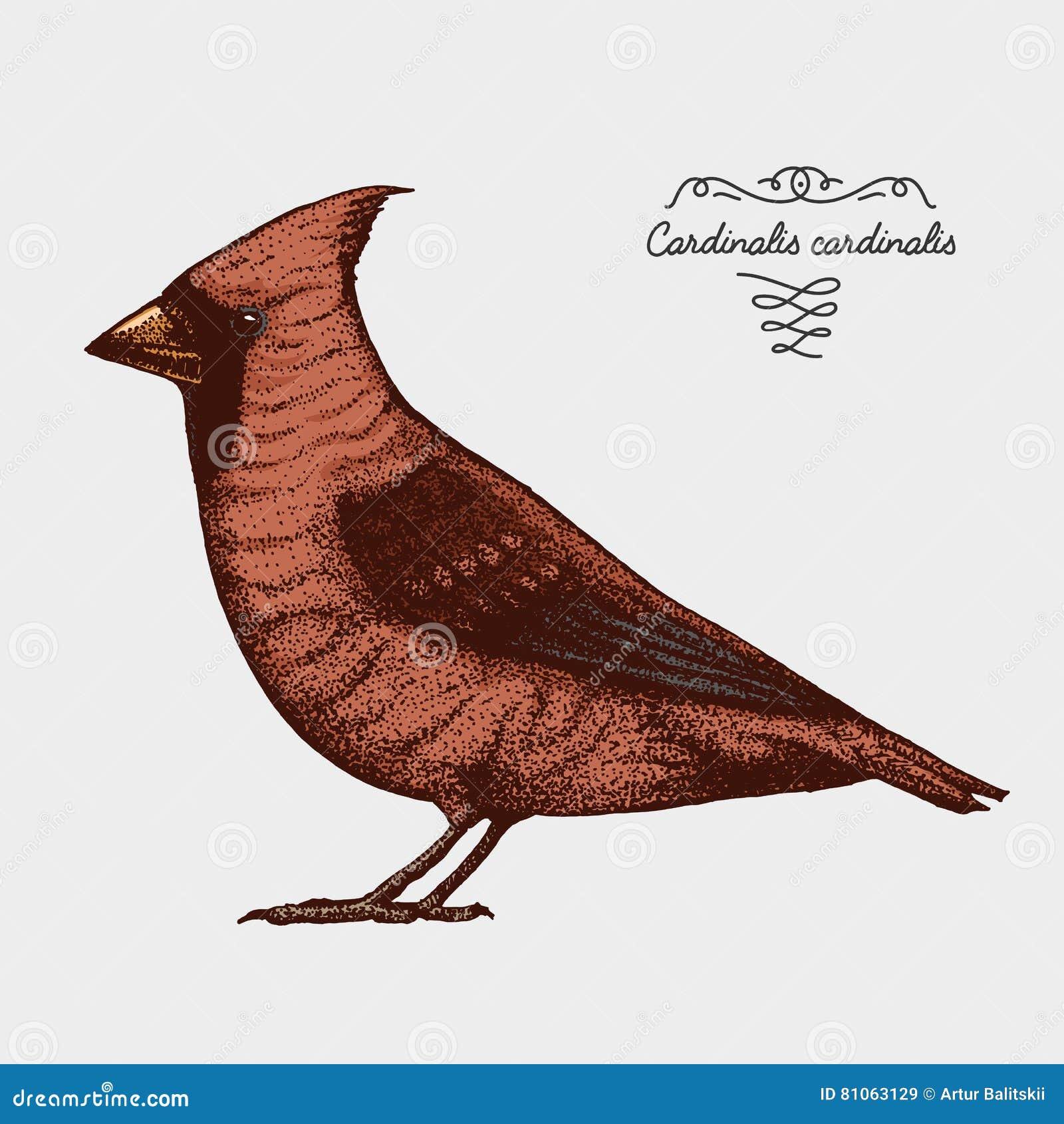 Dé A Vector Exhausto El Pájaro Realista, Estilo Gráfico Del Bosquejo ...