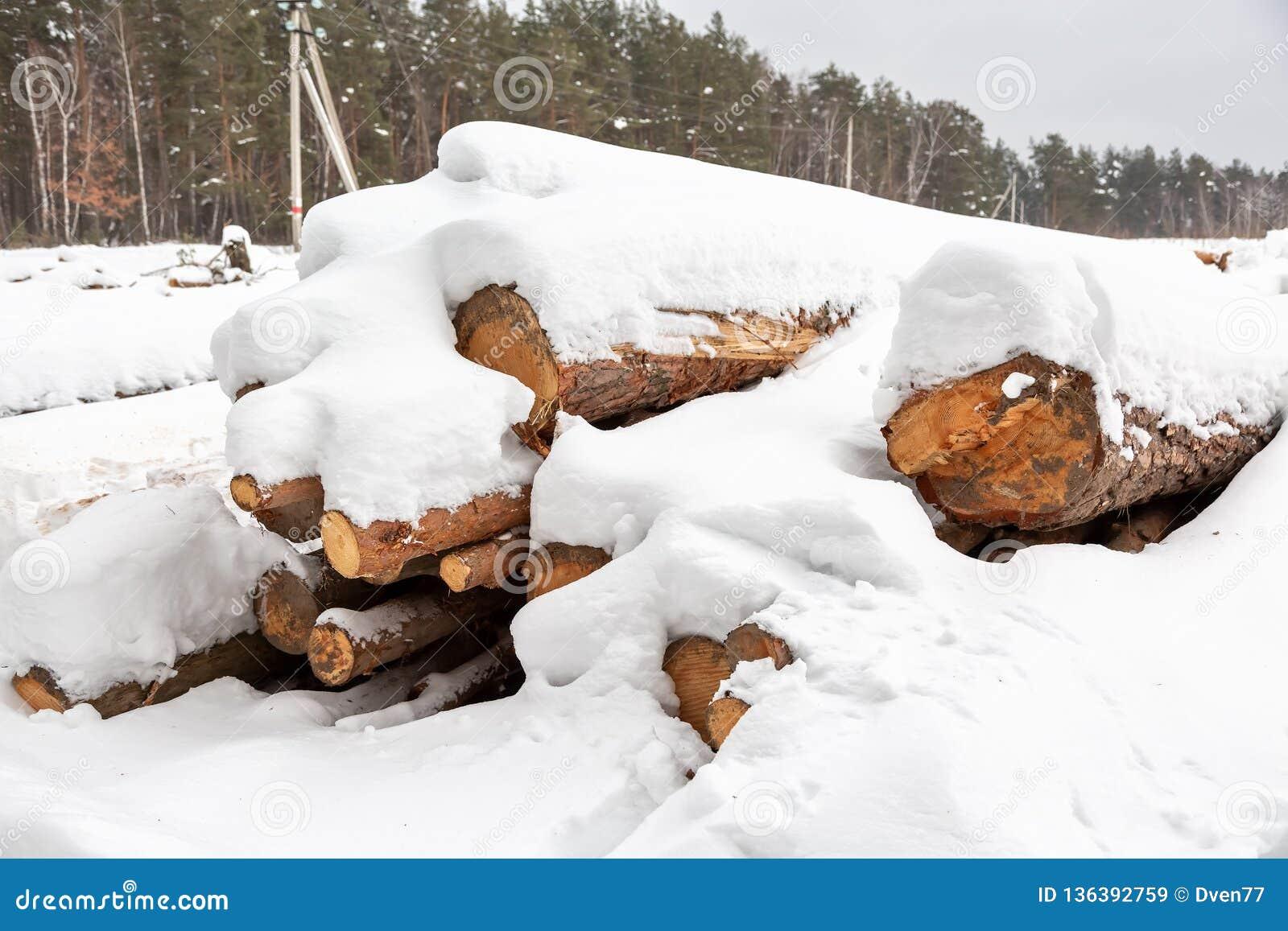 Déboisement Moisson de bois de charpente Logs sous la neige Actions de bois en congères d hiver de forêt