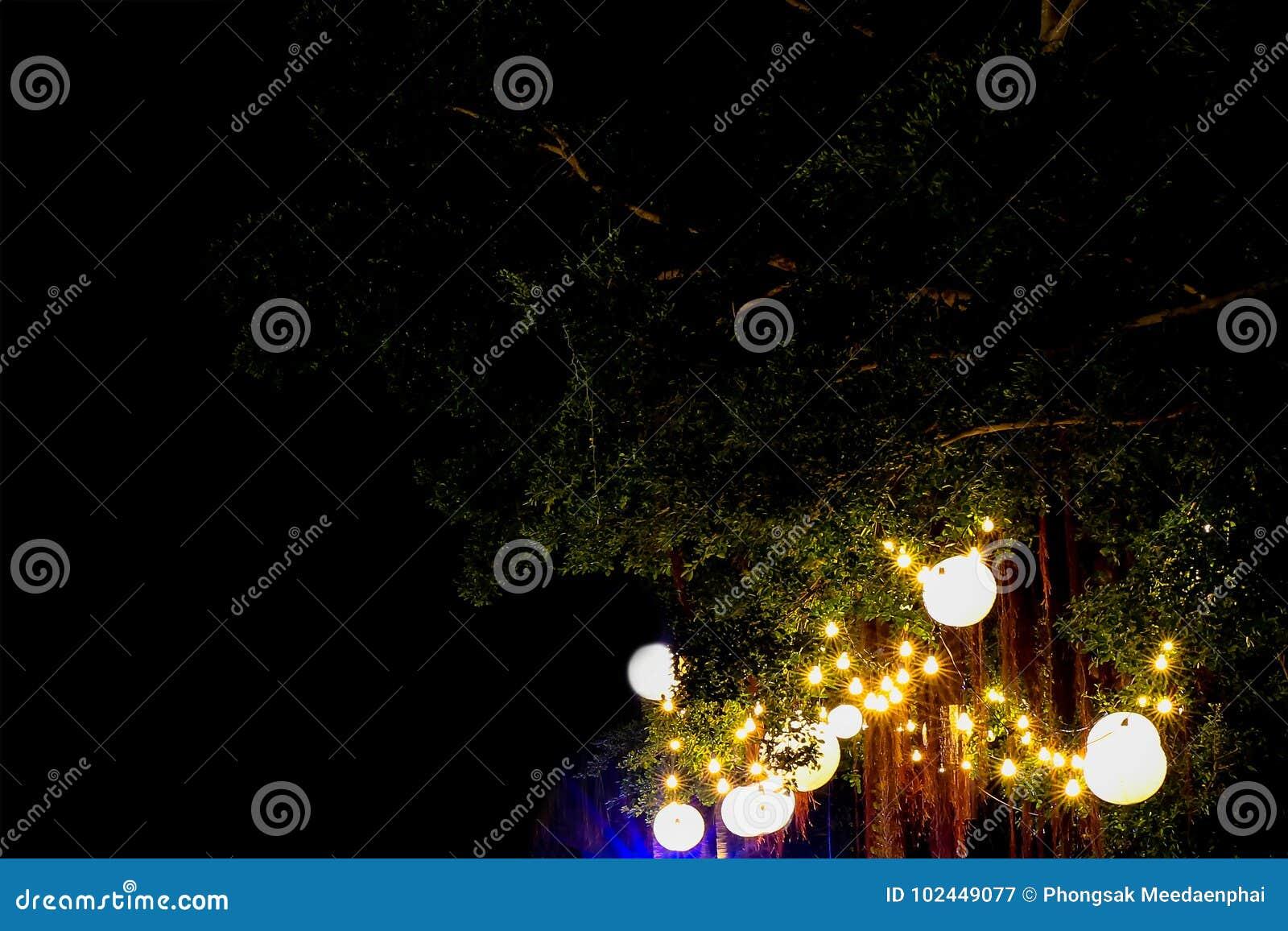 Décoration électrique D\'ampoule Sur Le Grand Arbre Vert Dans Le ...