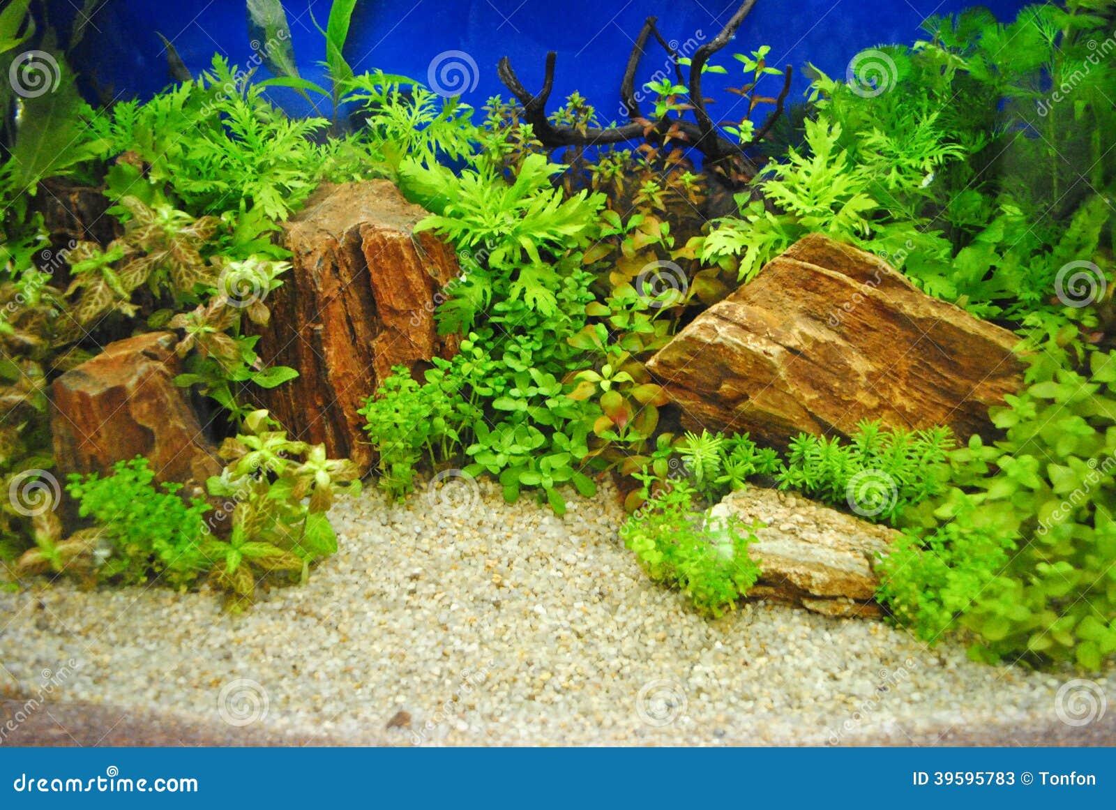 d 233 coration d aquarium photo stock image 39595783