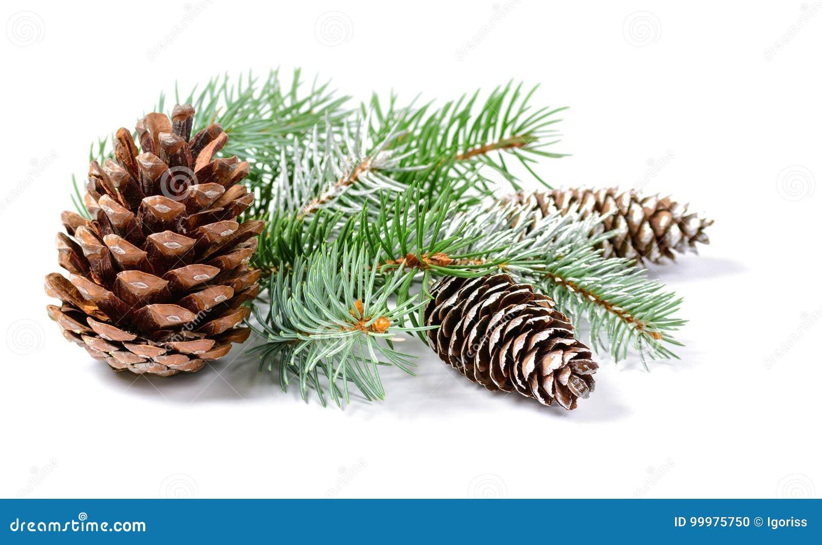 Décoration de Noël avec l arbre de sapin et cônes d isolement sur un fond blanc