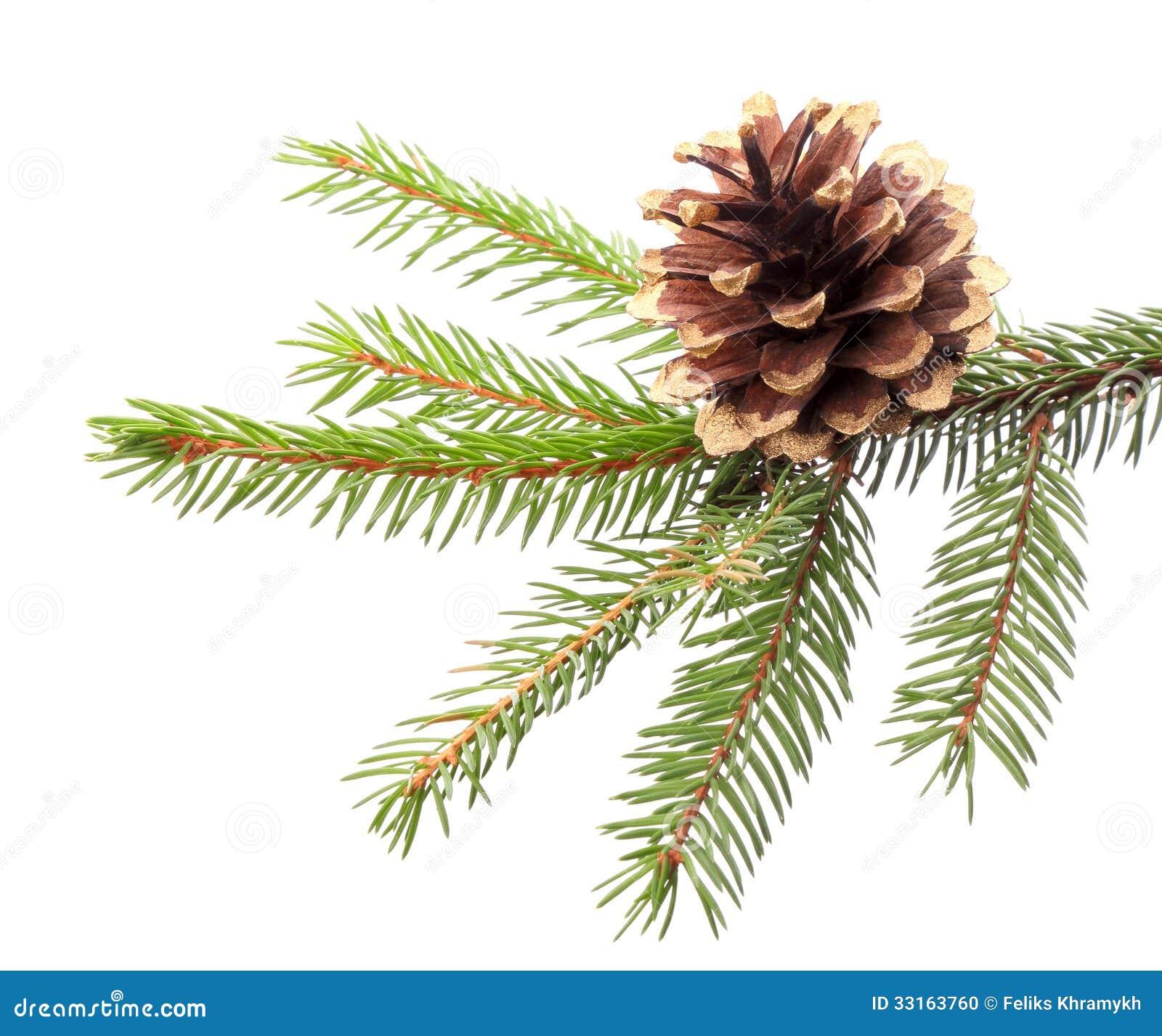 D coration de no l branche de sapin avec le c ne dor for Branche de sapin deco noel