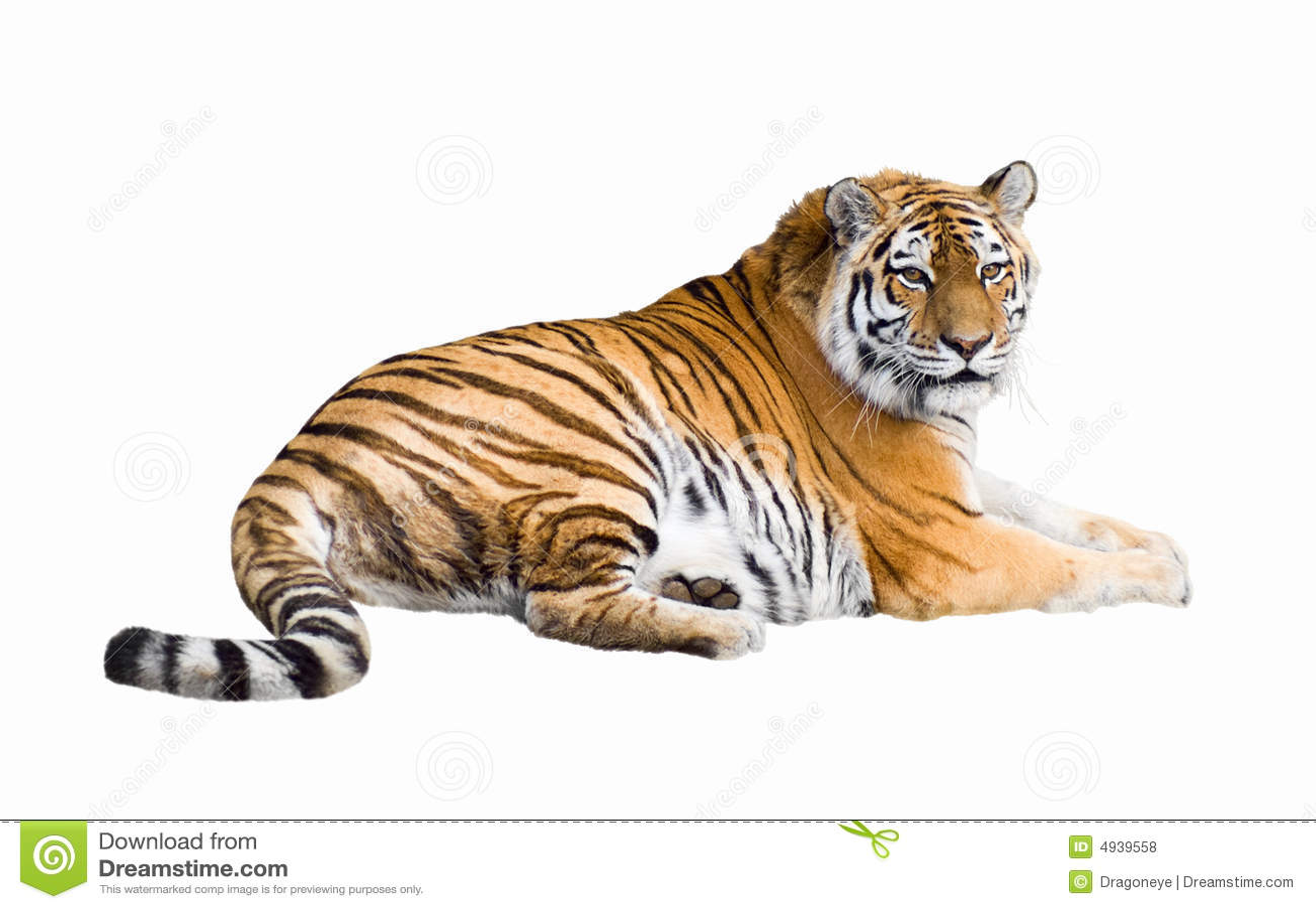Découpage sibérien de tigre