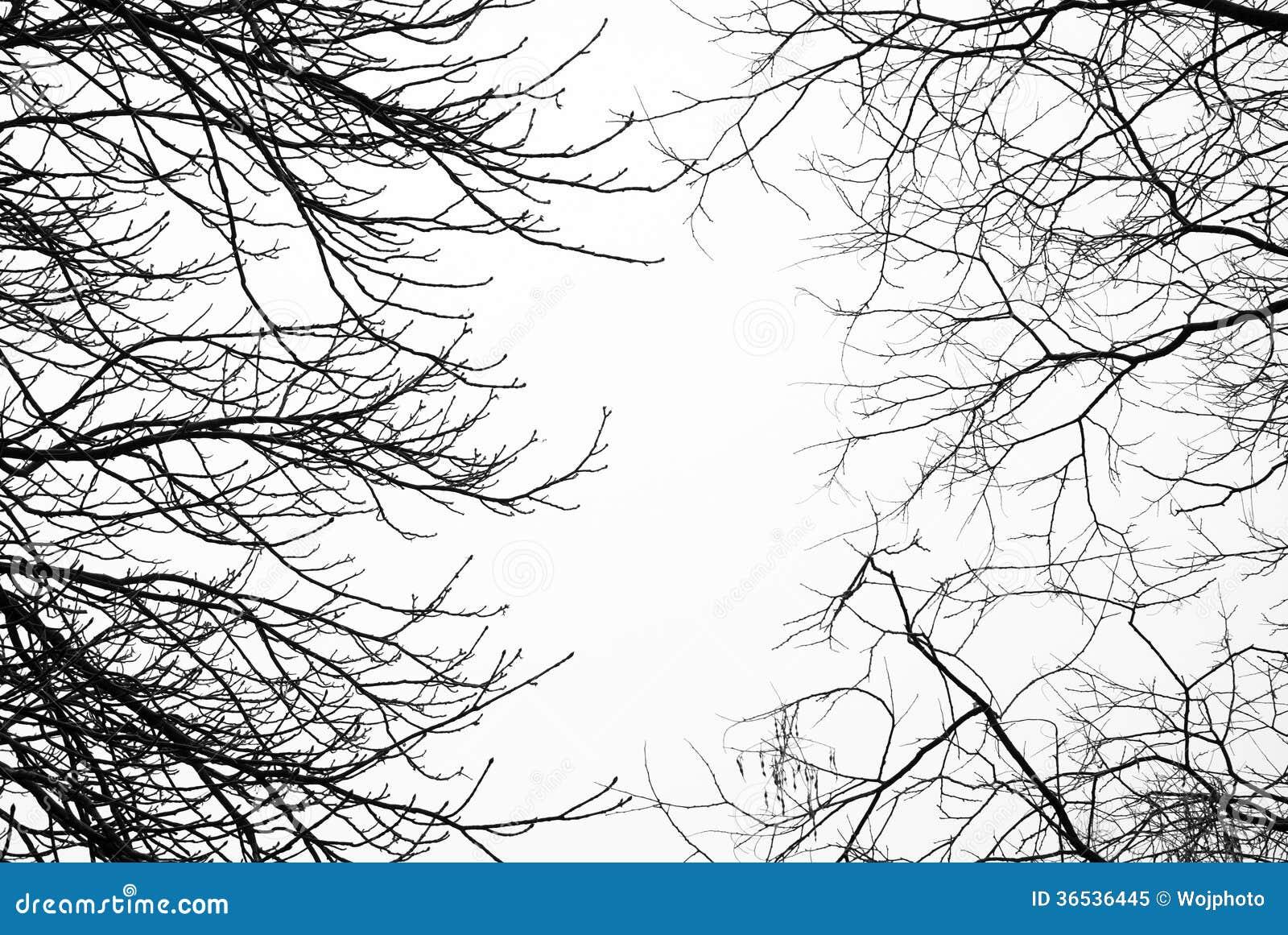D couvrez les branches d 39 arbre sans feuilles avec le ciel blanc derri re photo libre de droits - Se couper les veines sans douleur ...