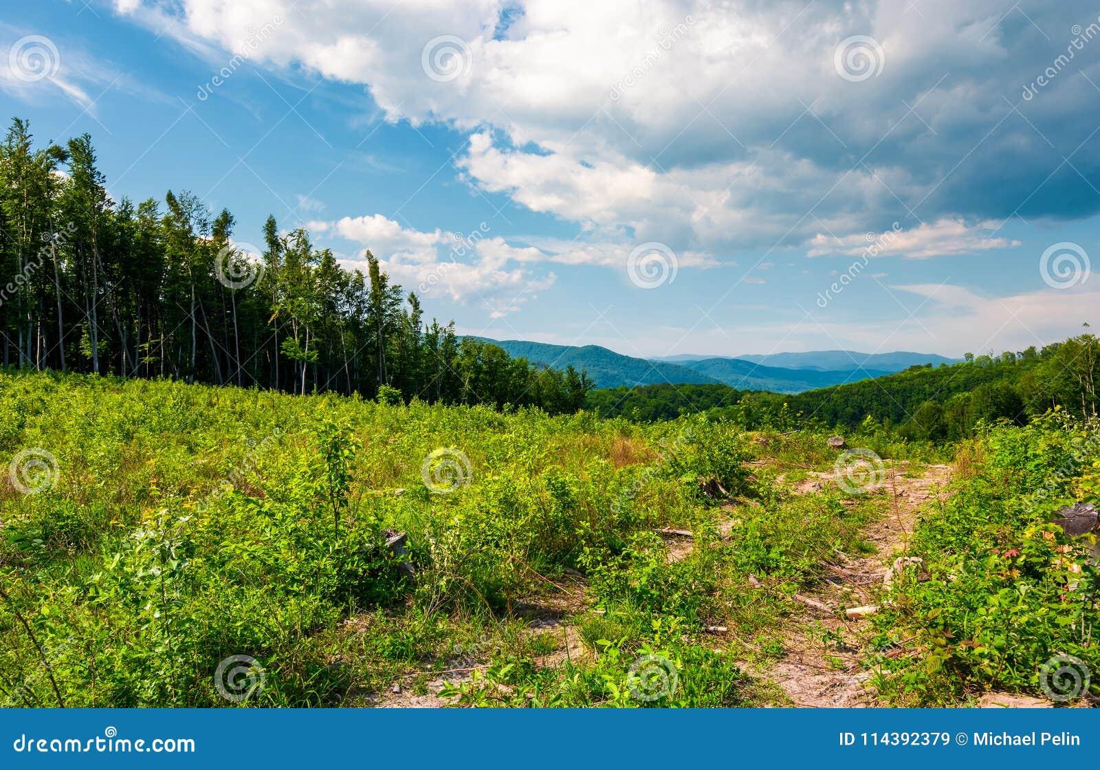 Dégagement de forêt sur le flanc de coteau