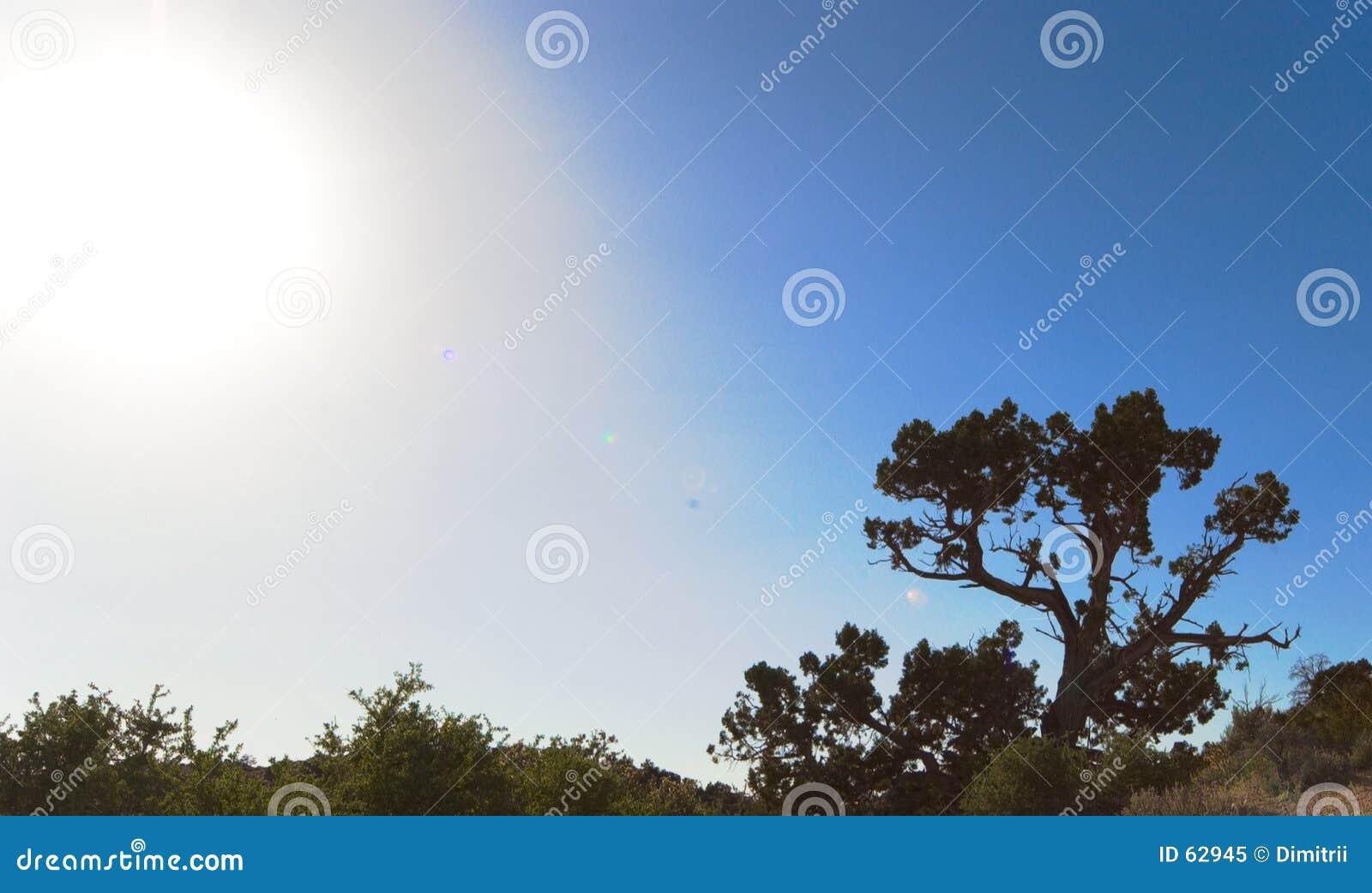 Download Désert de Mojavi image stock. Image du ciel, solitude, sunset - 62945
