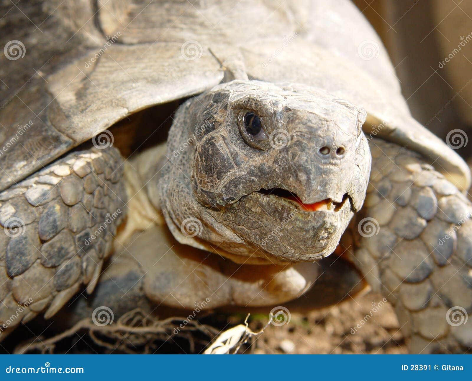 Détail de tortue