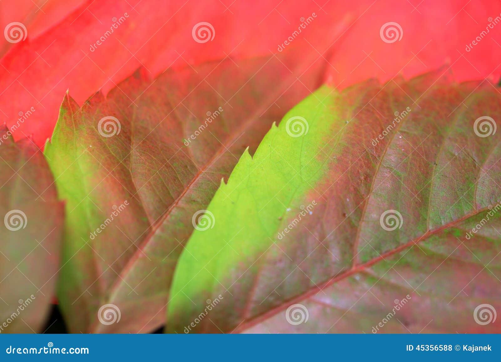 Détail des feuilles colorées de bel automne