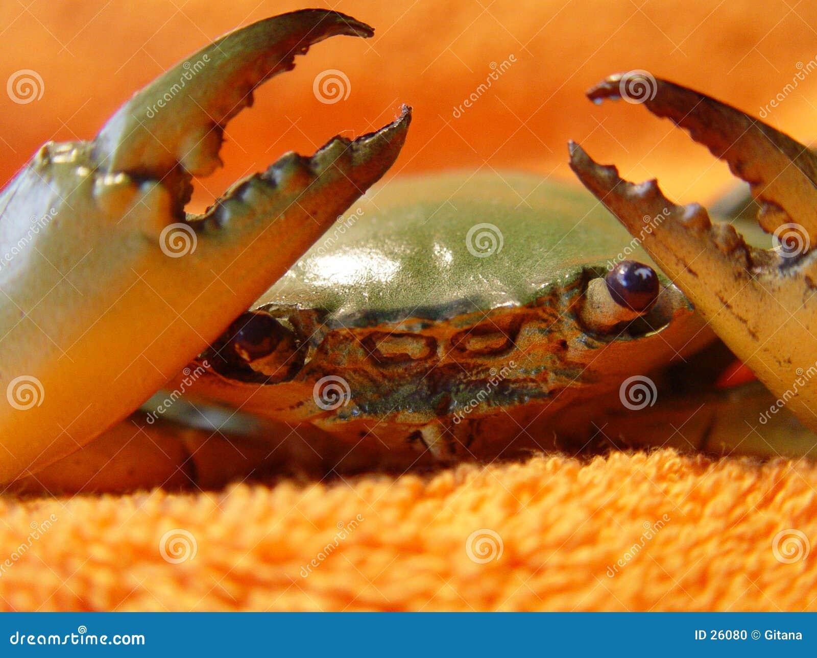 Détails de crabe enragé de langoustine