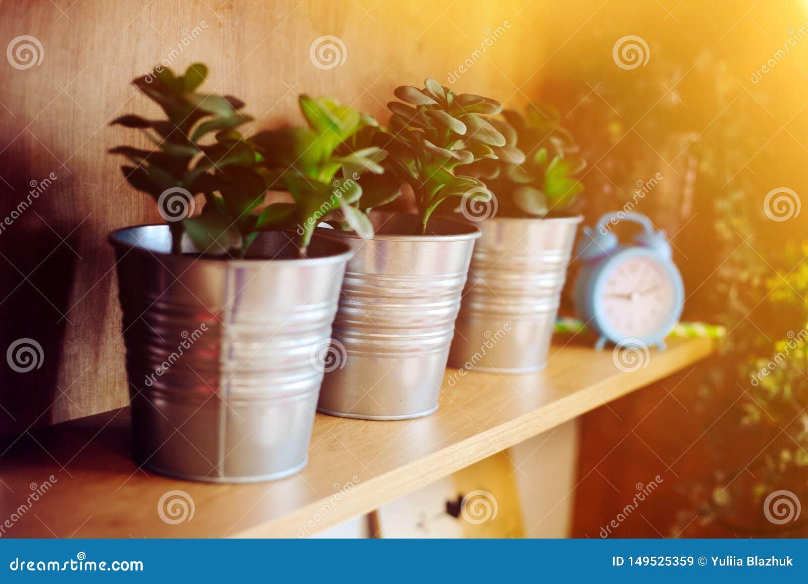 Détails de décoration intérieure, fleurs dans des pots et horloges sur l étagère