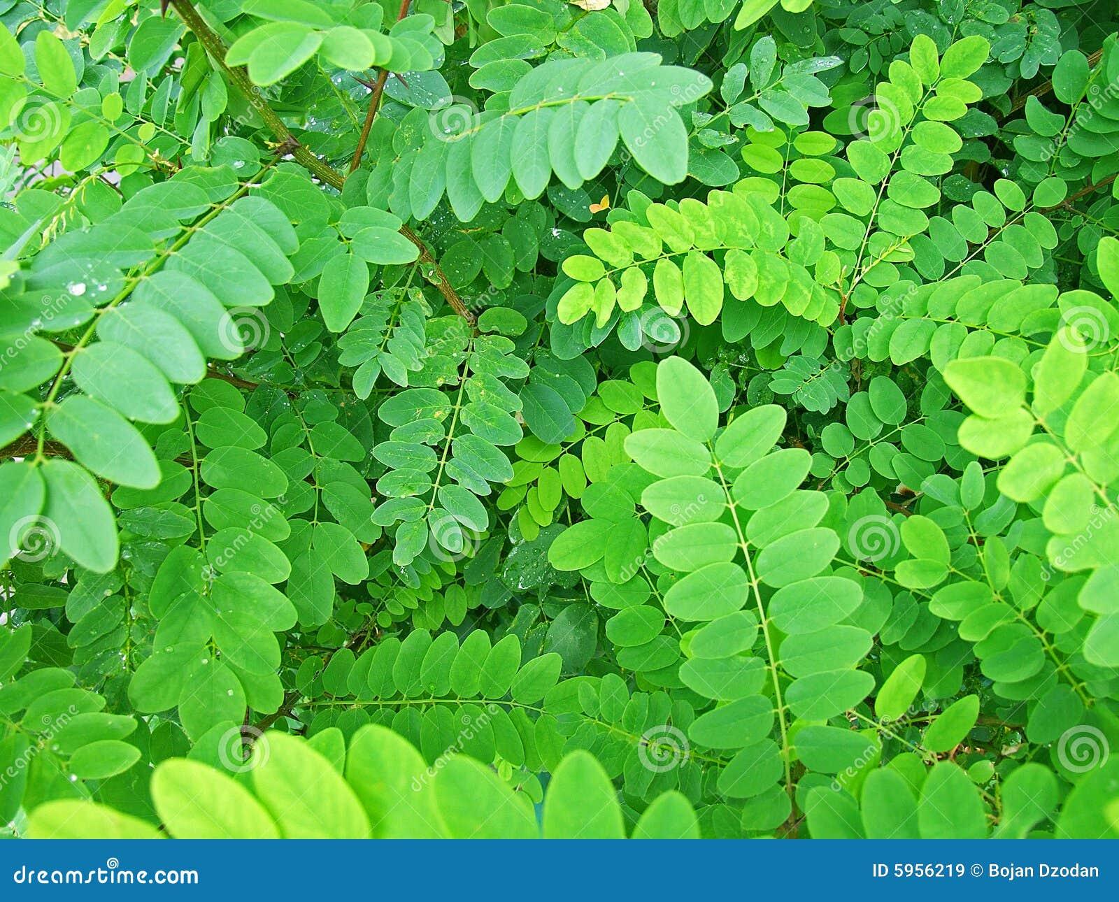 Détails des lames vertes