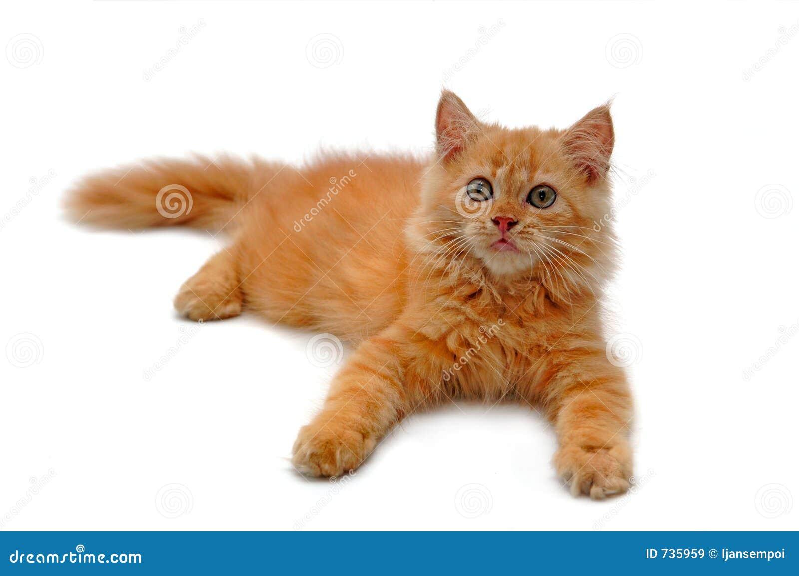 Détente de chat