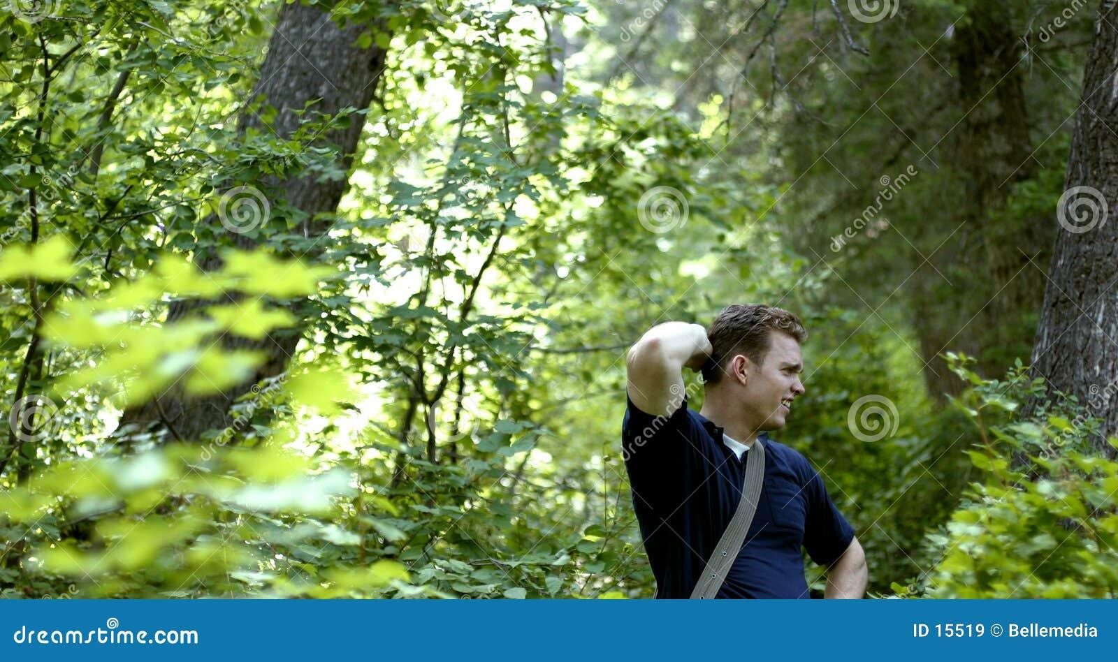 Détruit dans la forêt