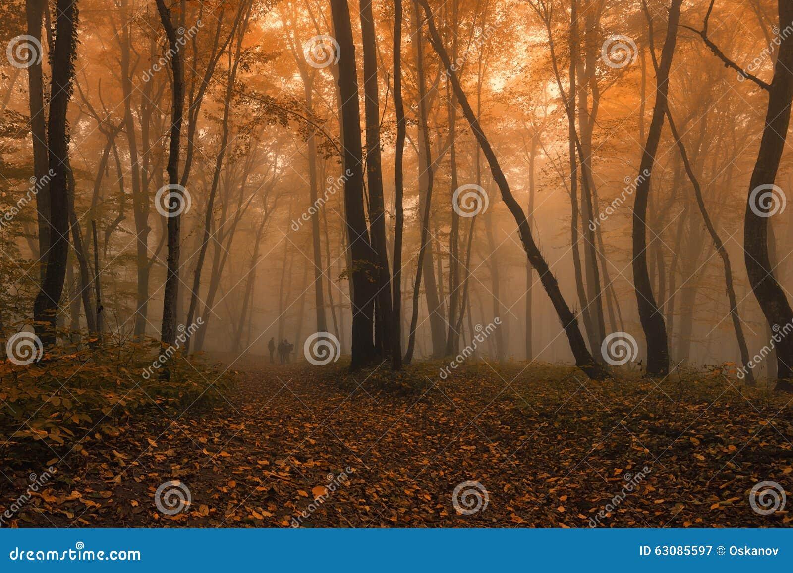 Download Détruit dans la forêt image stock. Image du nature, vert - 63085597