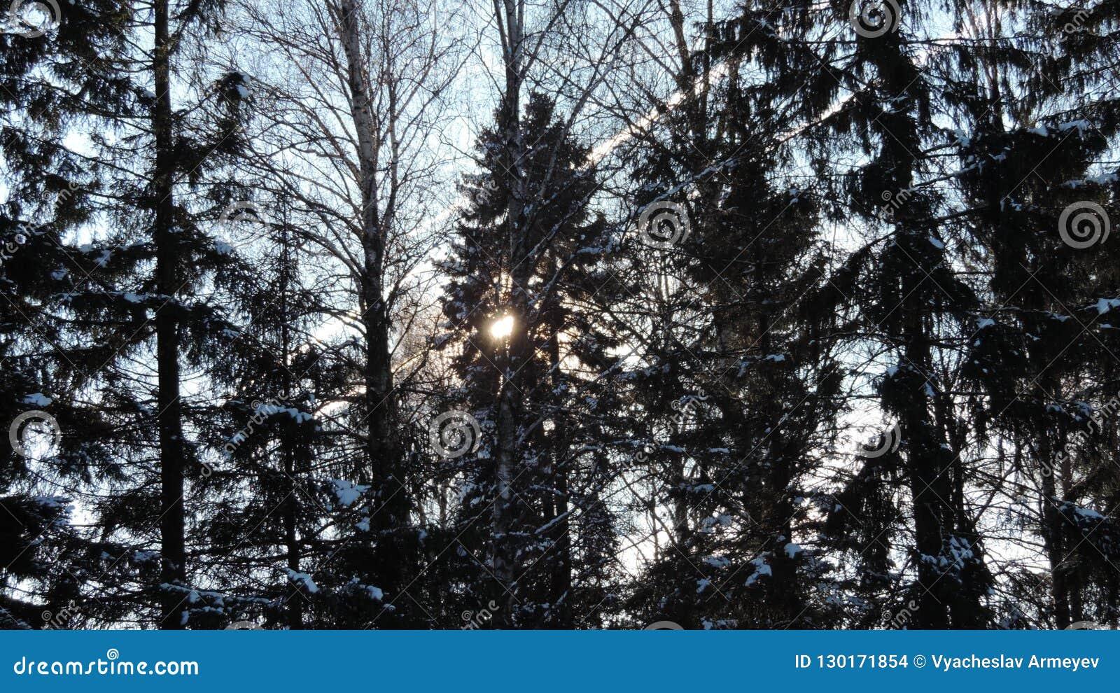 Día de invierno en bosque