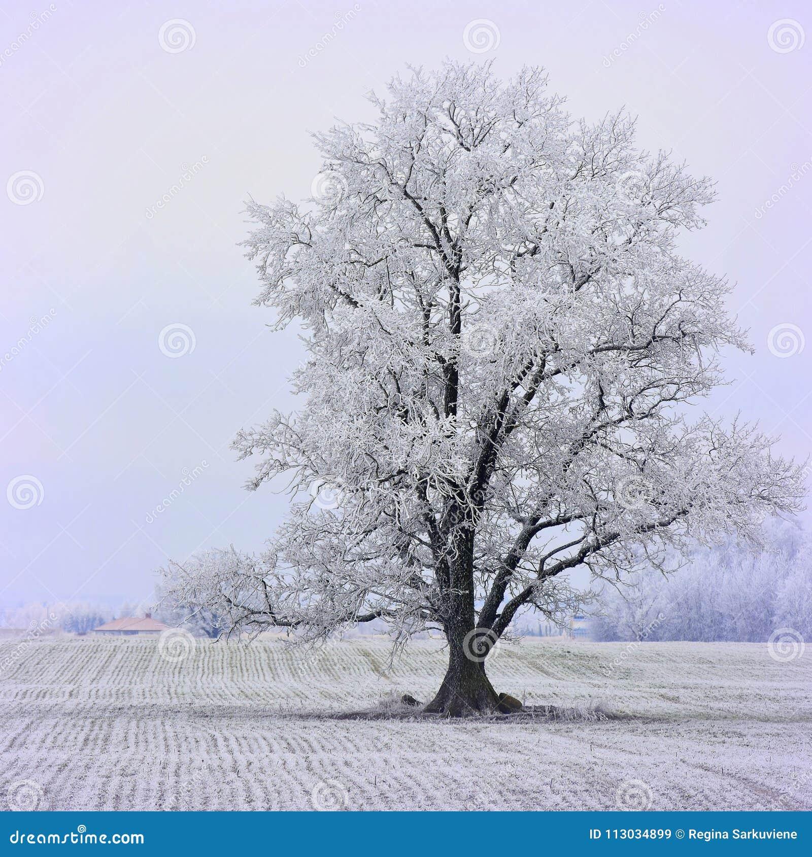 Día de invierno soleado brumoso en Lituania