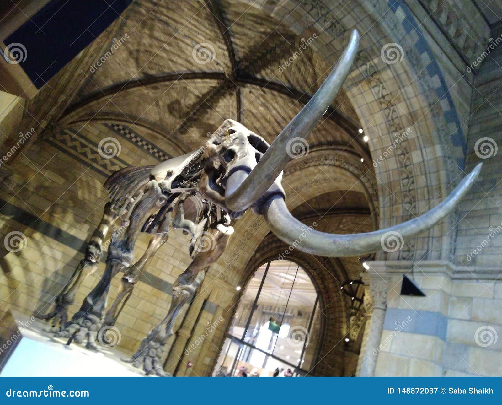 D?a hermoso Reino Unido del museo esquel?tico del elefante,