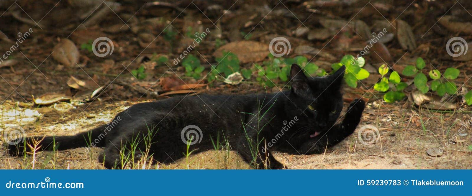Download Día Negro De La Gato-limpieza Imagen de archivo - Imagen de suerte, lengüeta: 59239783