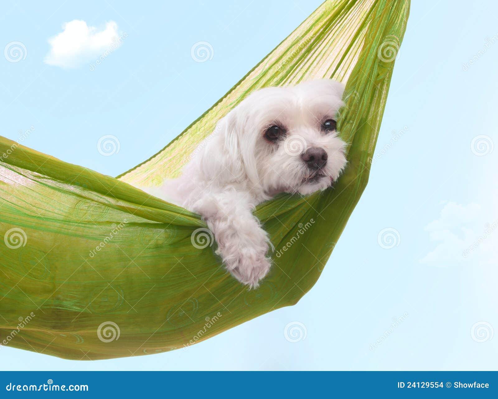 Días de perro dazy perezosos de verano