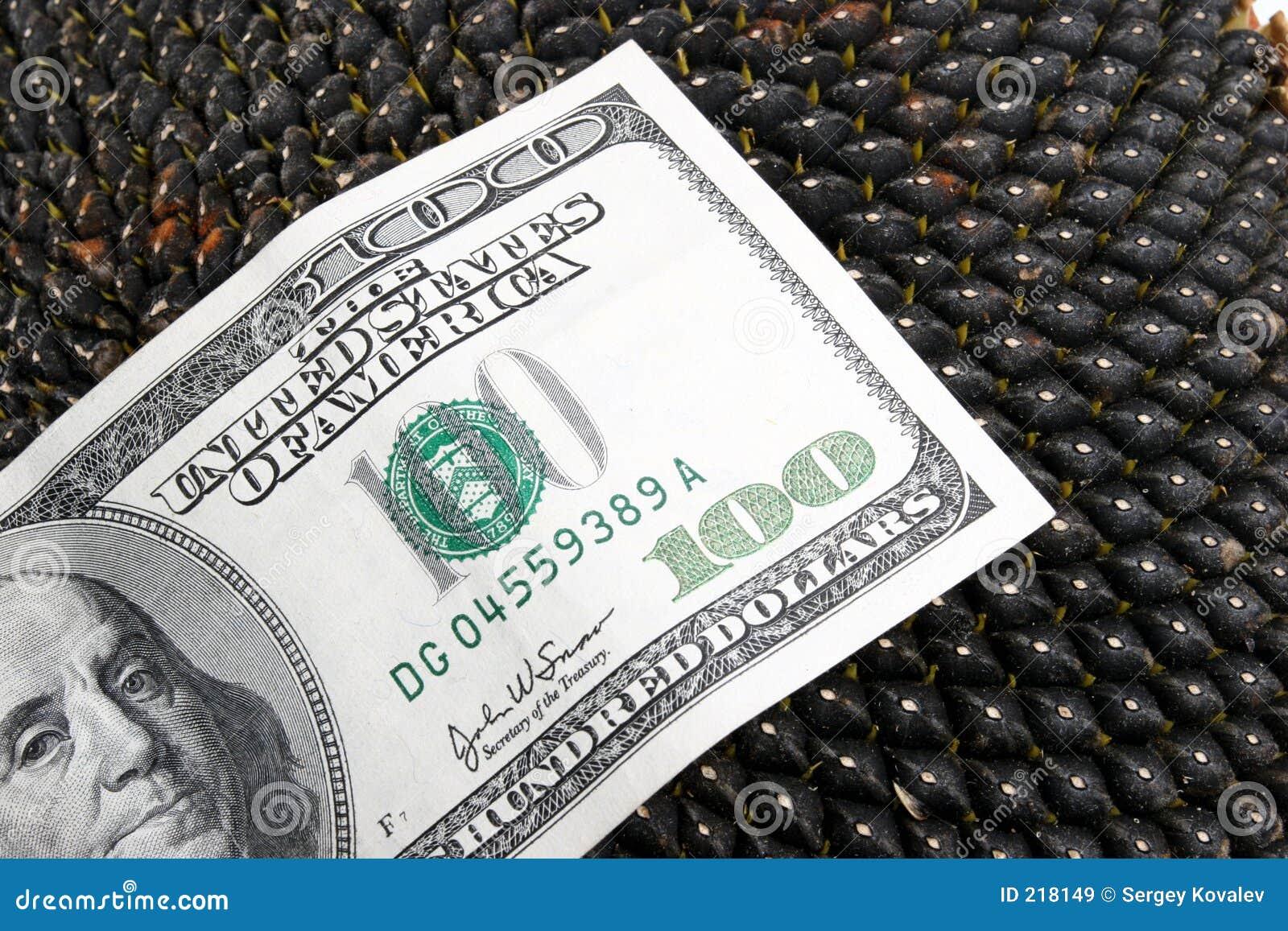 Dólar en los gérmenes de girasol de un girasol