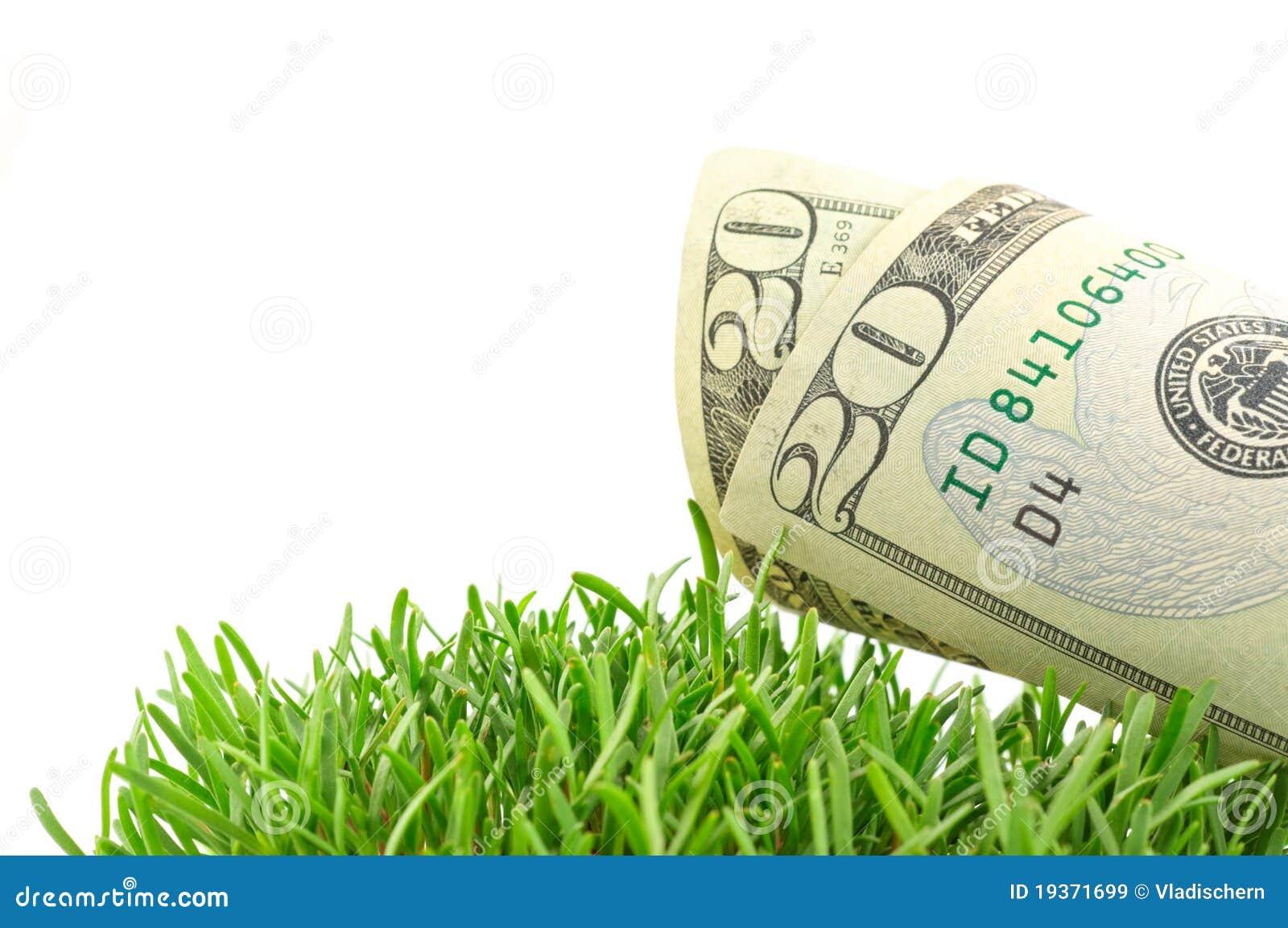 Dólares na grama verde