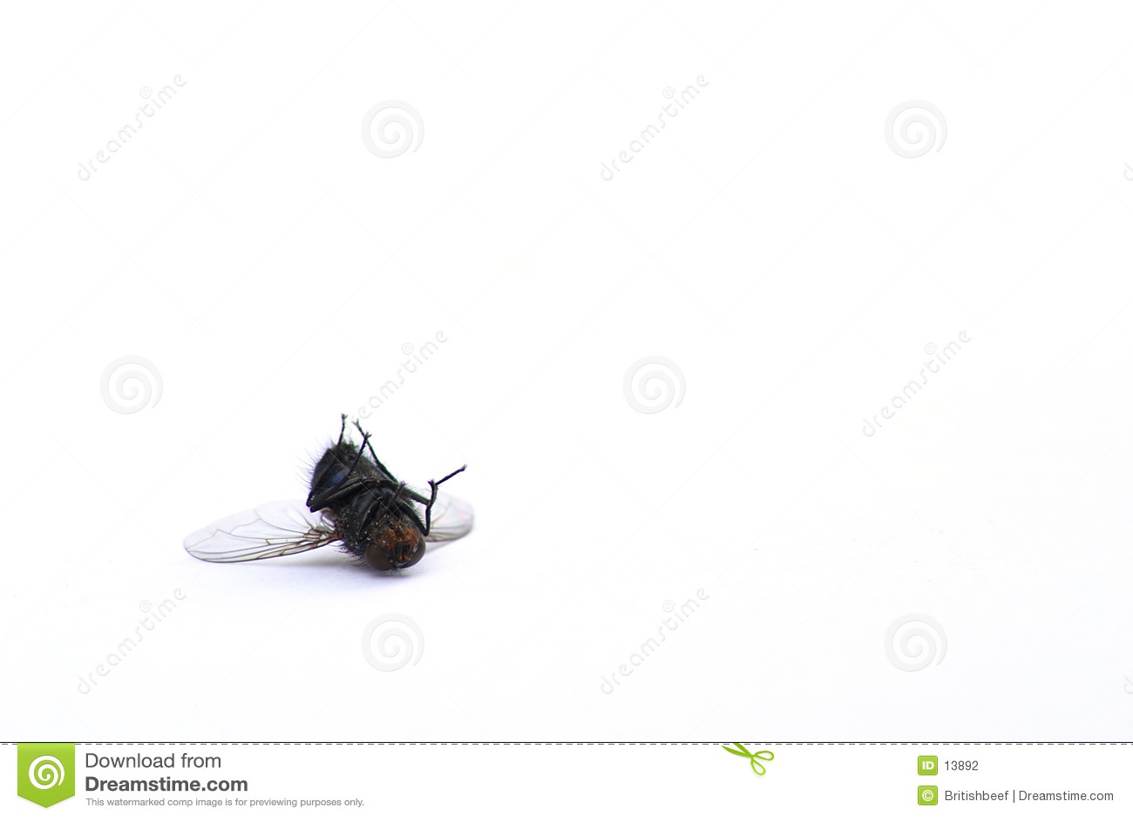 Död fluga
