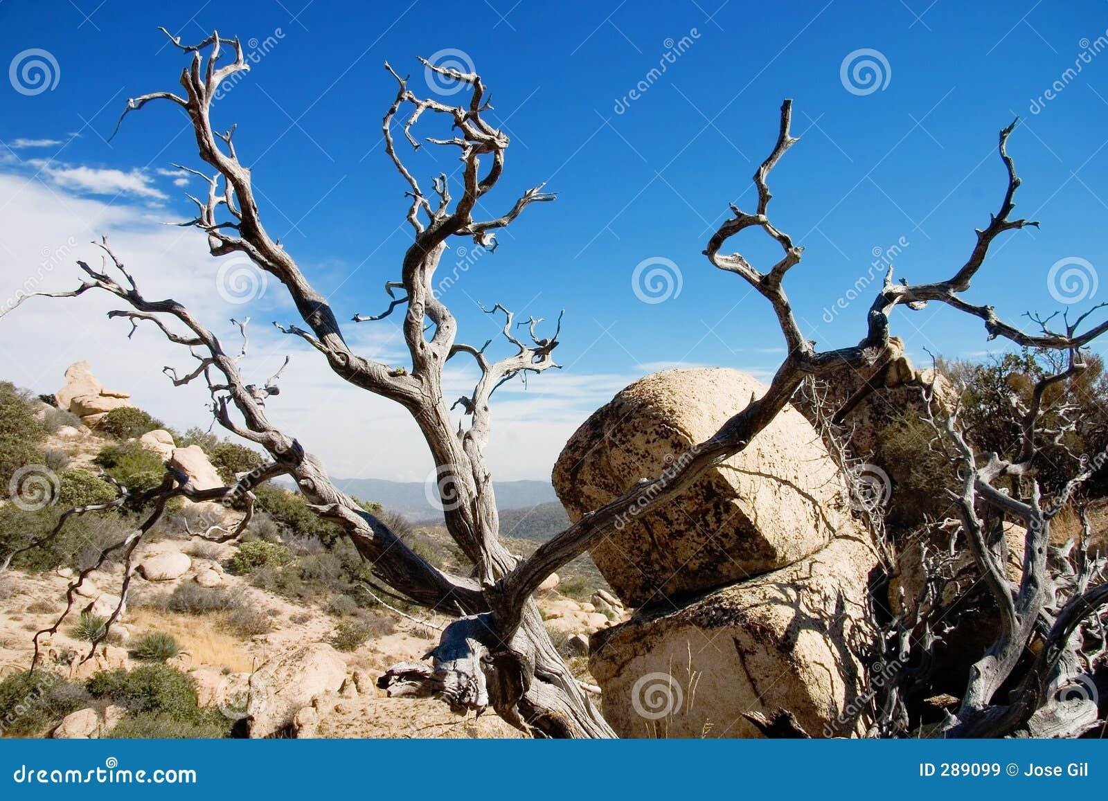 Död horisontalliggandetree