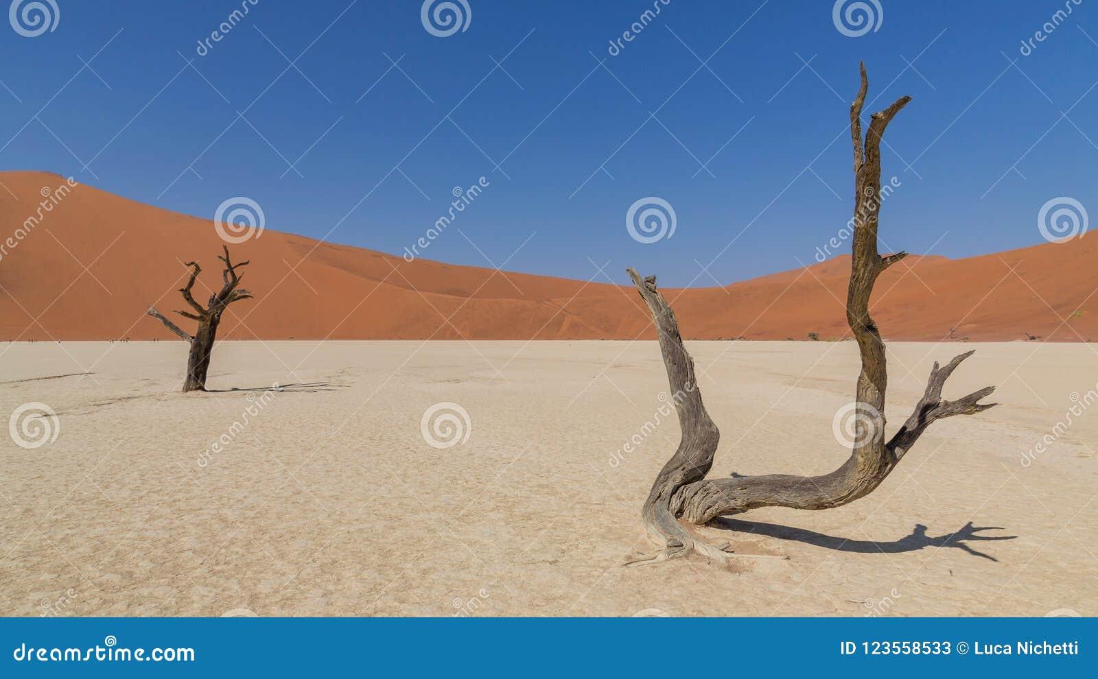 Döda akaciaträd i DeadVlei, Sossusvlei, Namibia